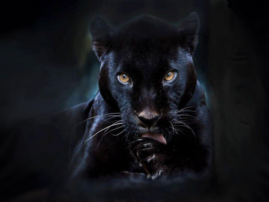 black leopard backgrounds - photo #12