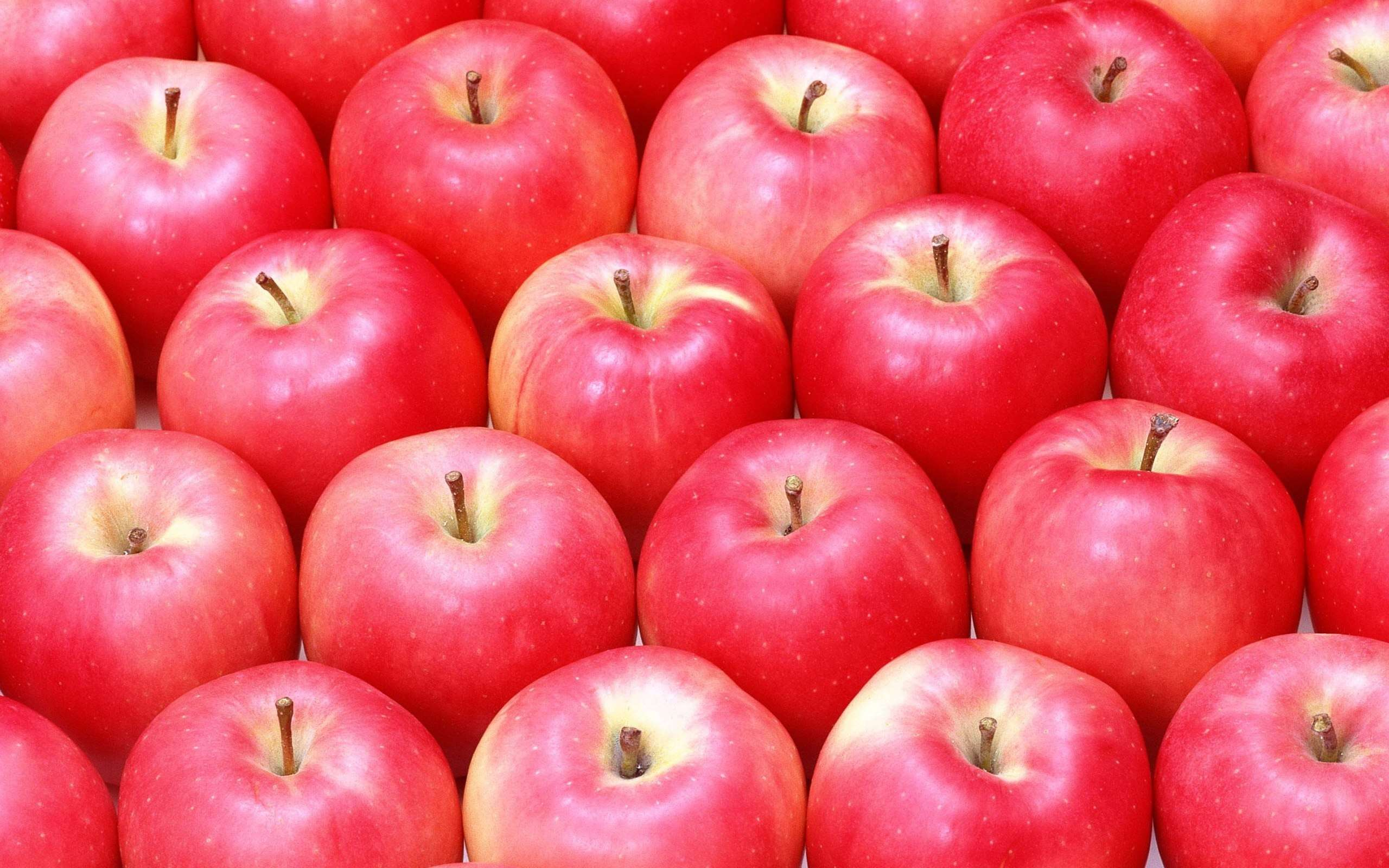 Apples wallpapers wallpaper cave - Red apple wallpaper ...