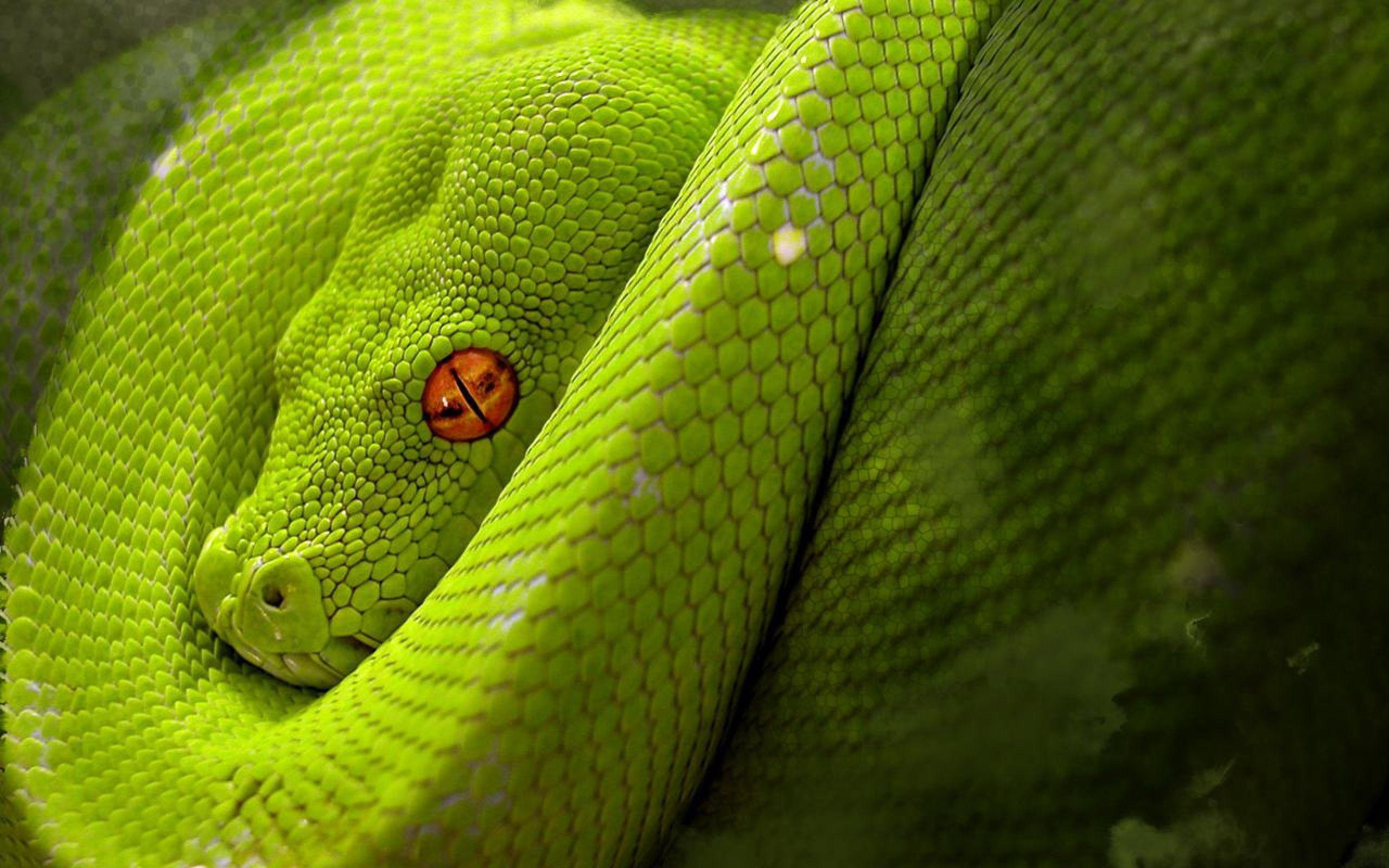the snake wallpapers - photo #44