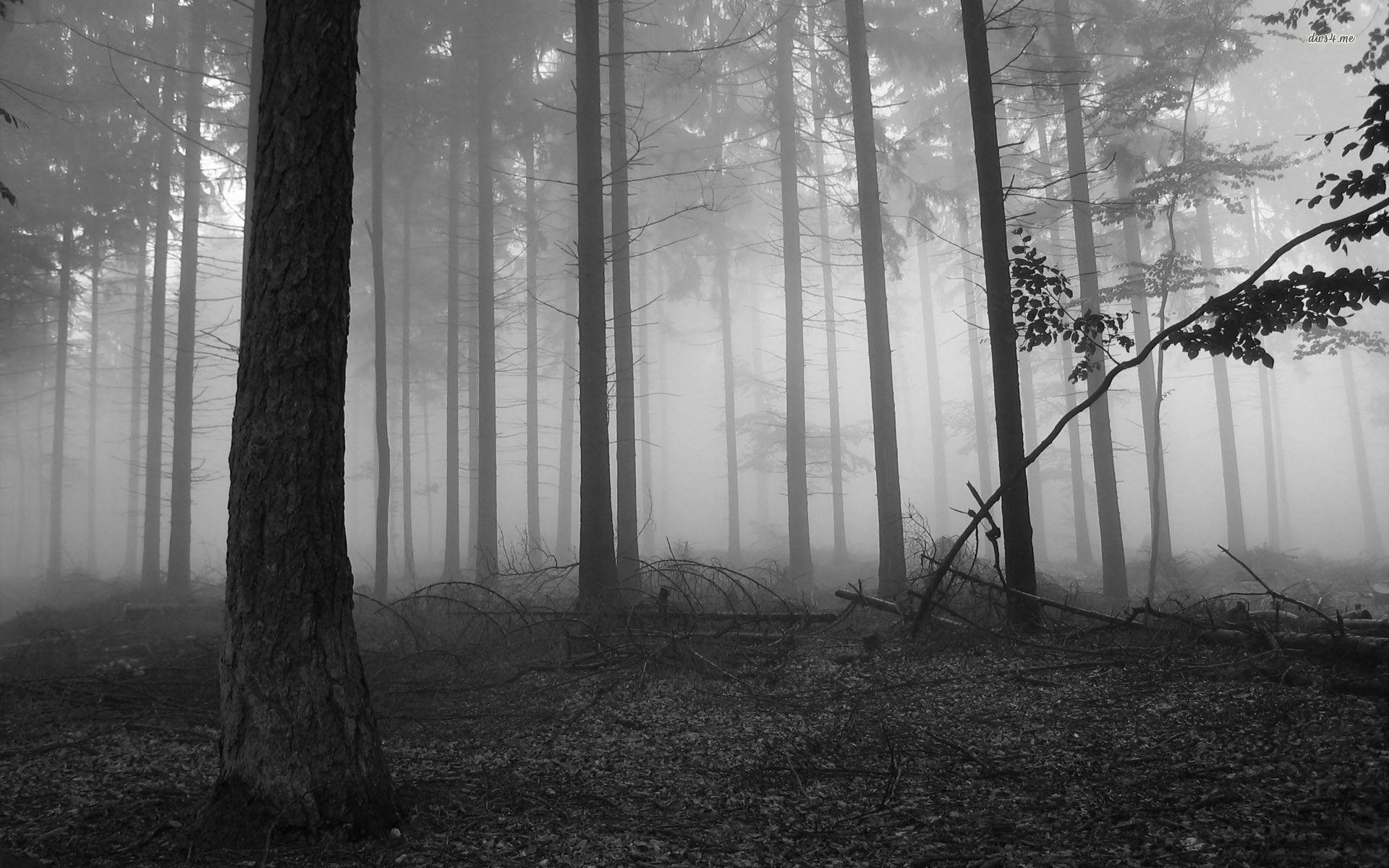 Dark Forest Background Images & Pictures - Becuo