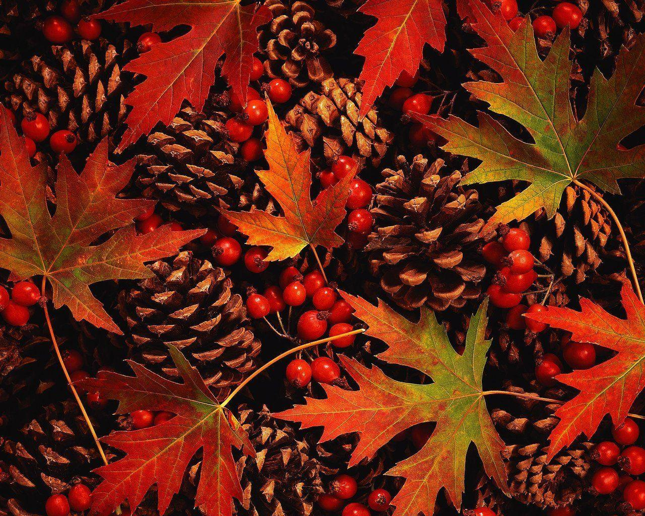 fall flowers wallpaper by - photo #25