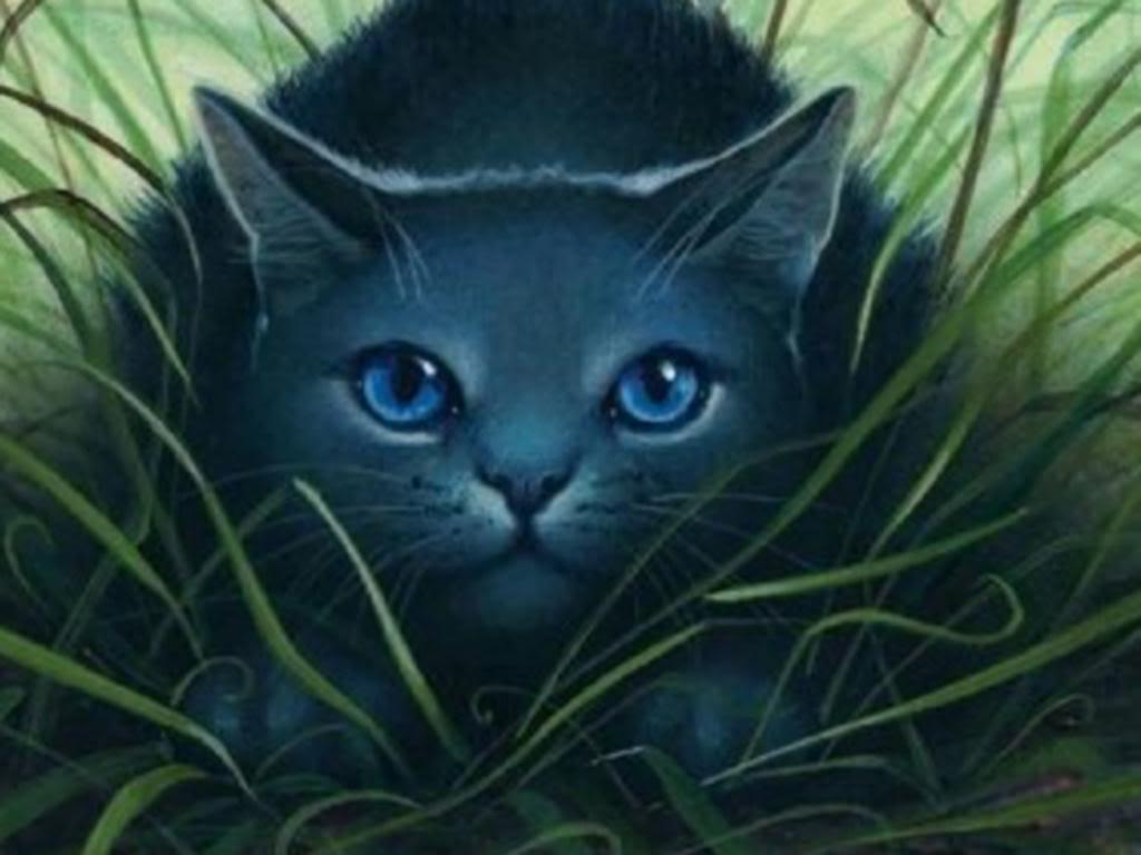 My Favorite Warrior Cats On Pinterest