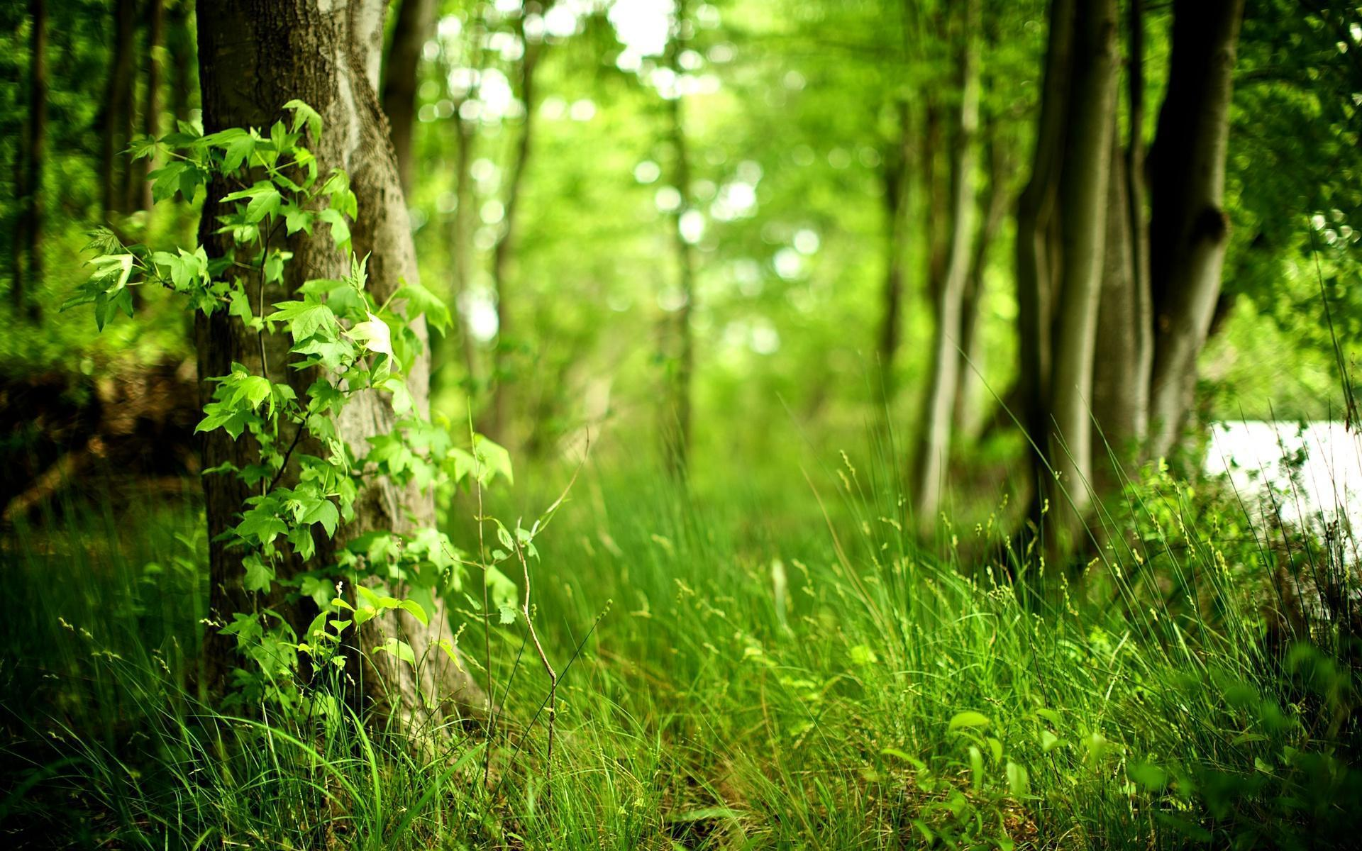 HD Green Forest Wallpaper