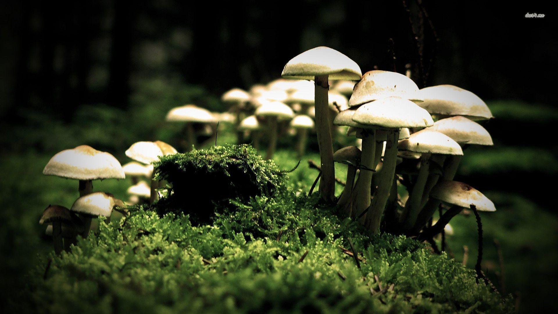Mushrooms Desktop Wallpapers THIS Wallpaper
