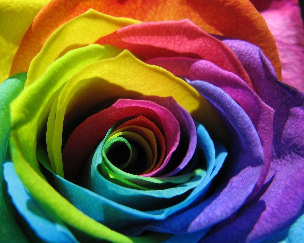 rainbow flower background - photo #19