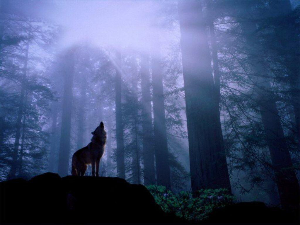 the howling movie wallpapers - photo #27
