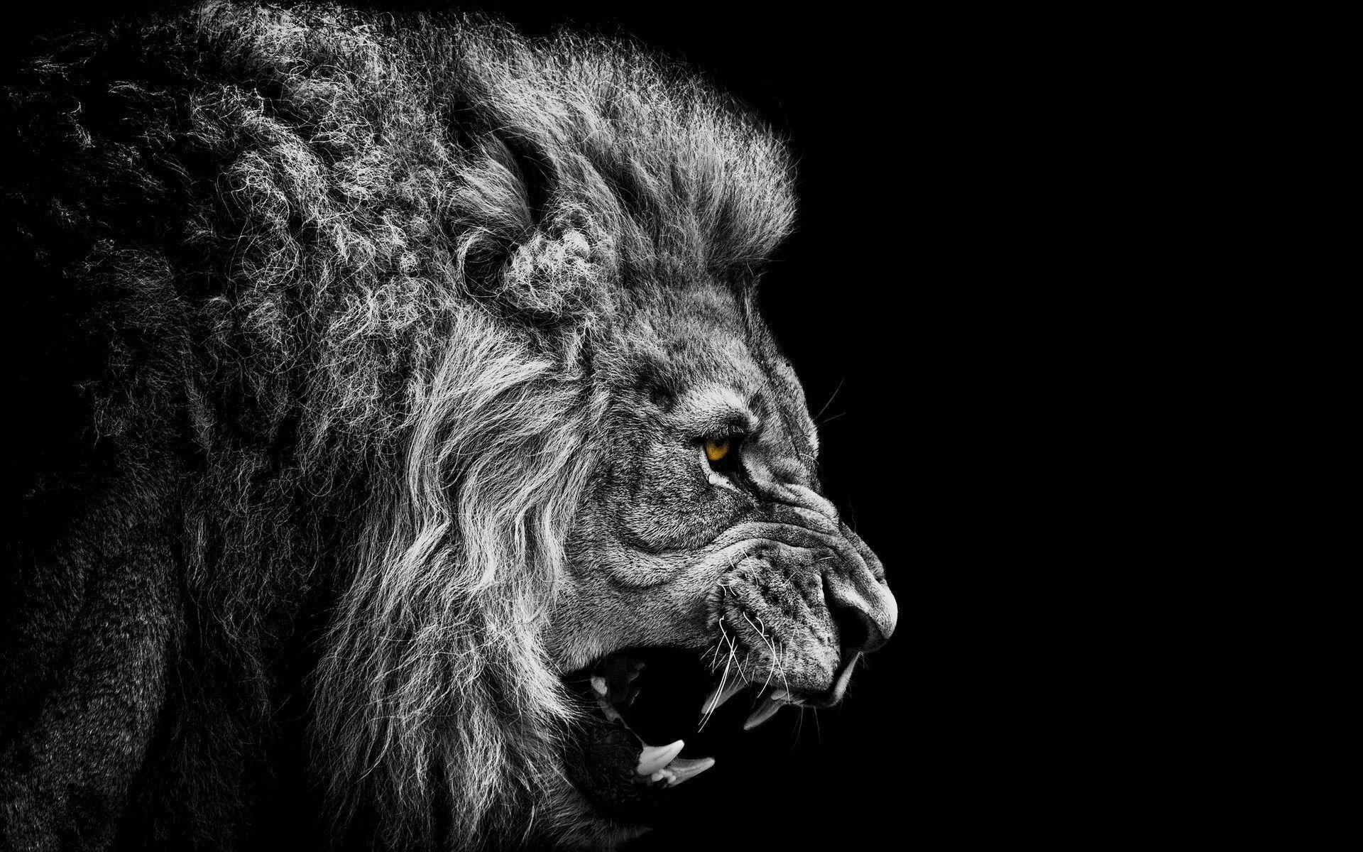lion face wallpaper - photo #31