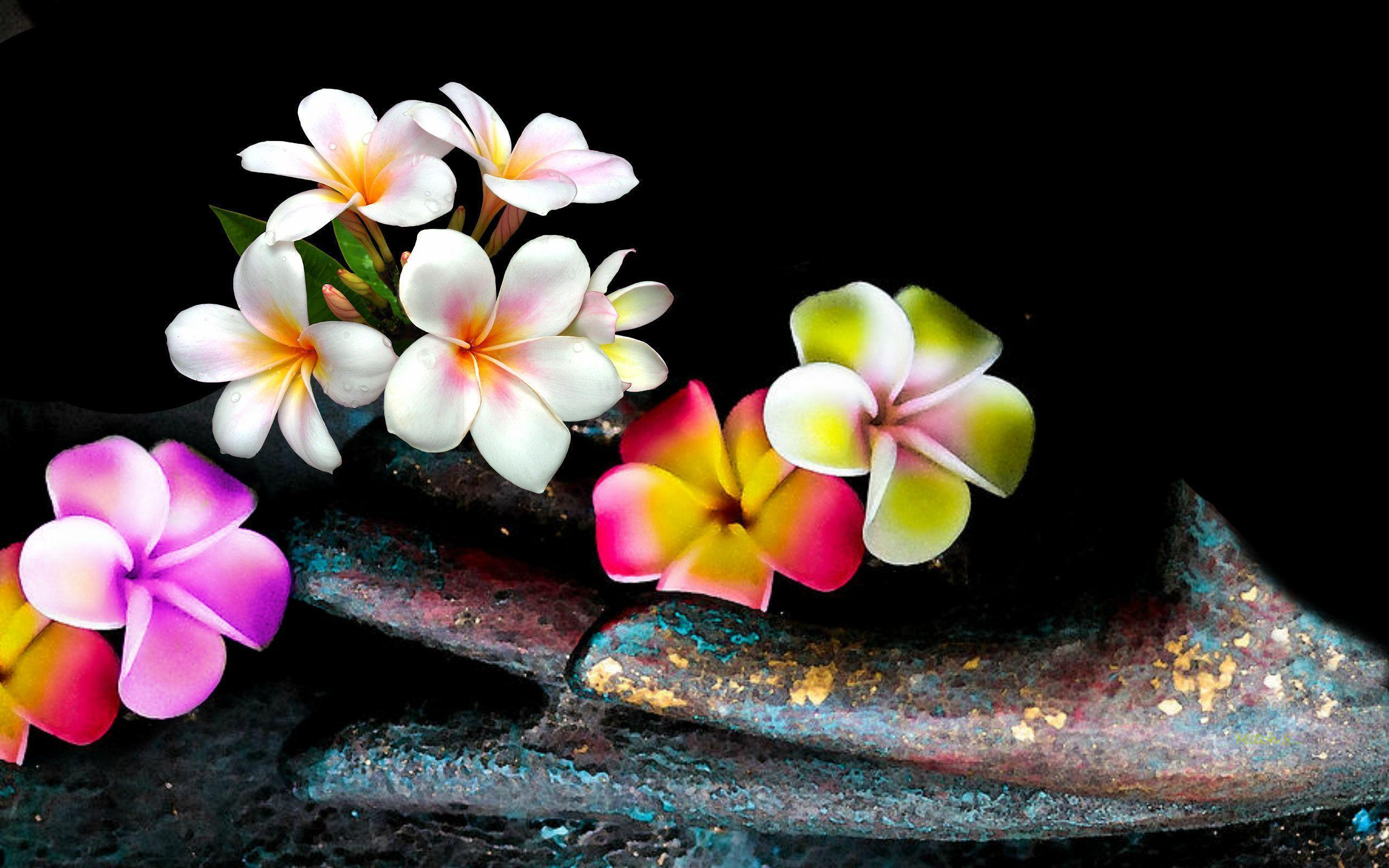 Plumeria Backgrounds Wallpaper Cave HD Wallpapers Download Free Images Wallpaper [1000image.com]