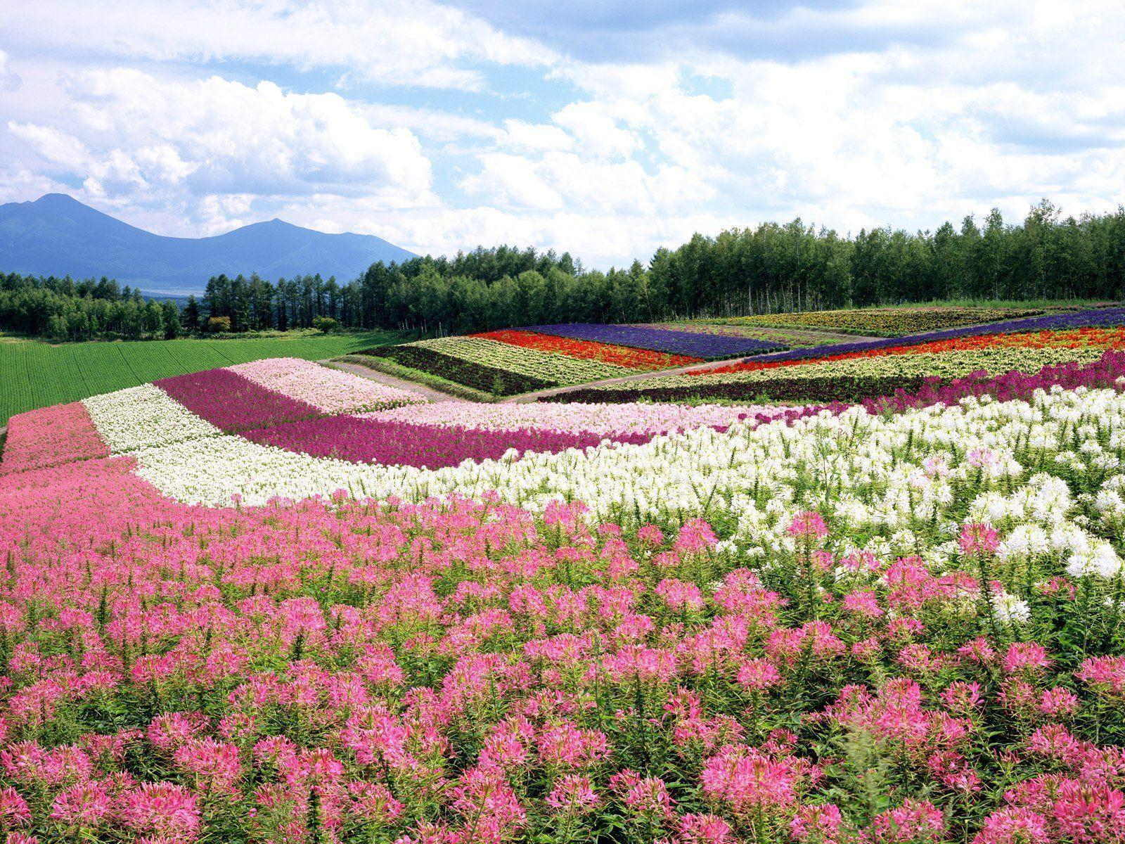 Picture of Flower Garden Wallpapers | Free Desk Wallpapers