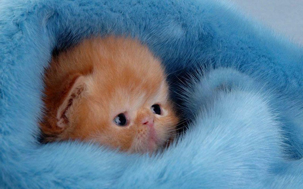 Cute Kitten Wallpaper - Kittens Wallpaper (16094695) - Fanpop