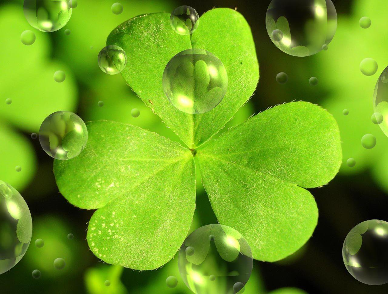 simple st patrick wallpaper - photo #16