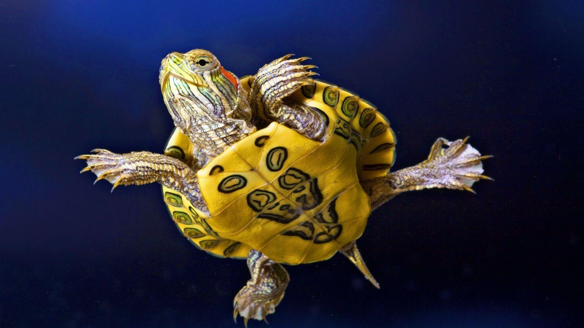 Turtle Wallpapers 4660 1920x1080 px ~ HDWallSource