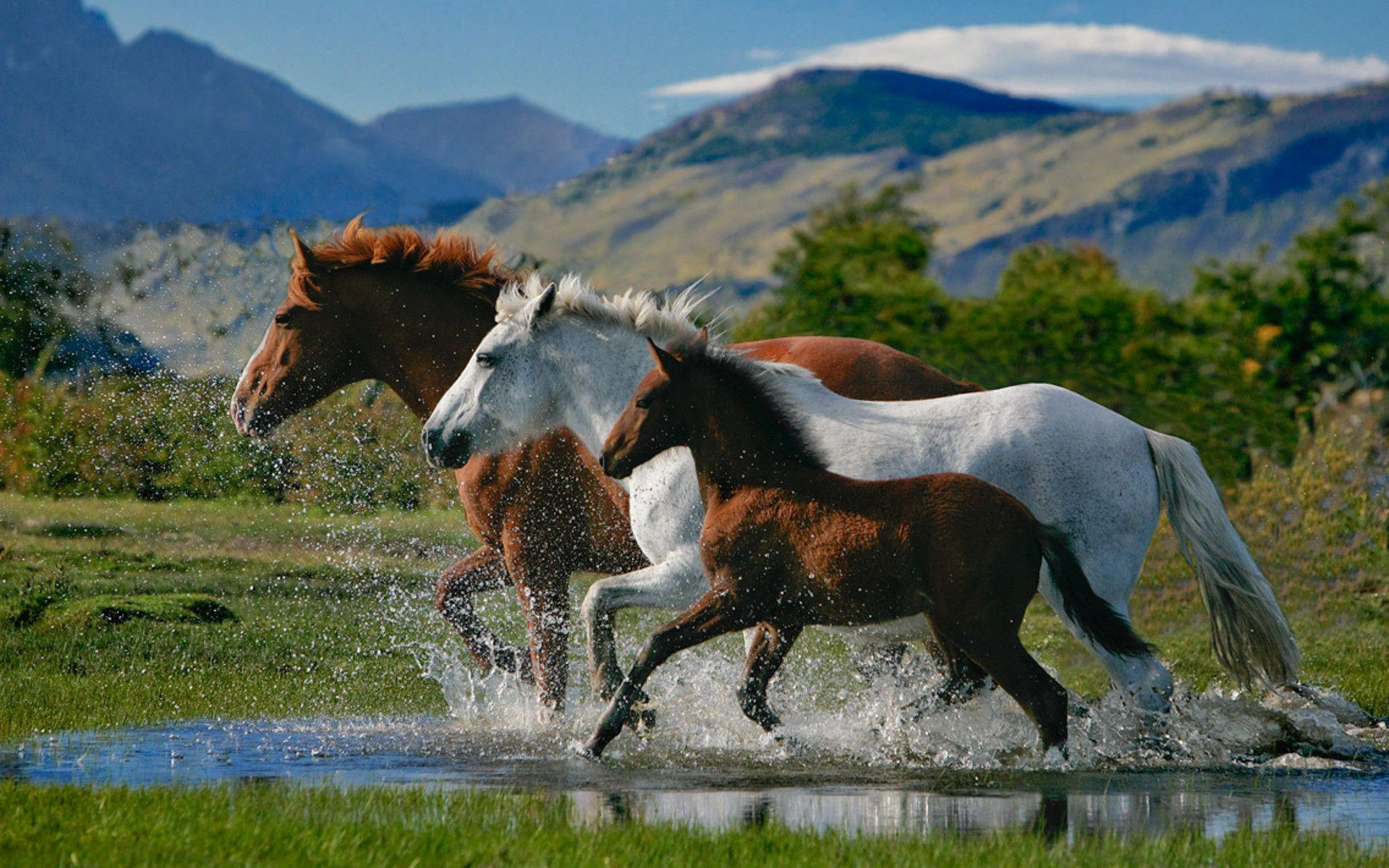 horses morning mountain dust nature HD wallpaper