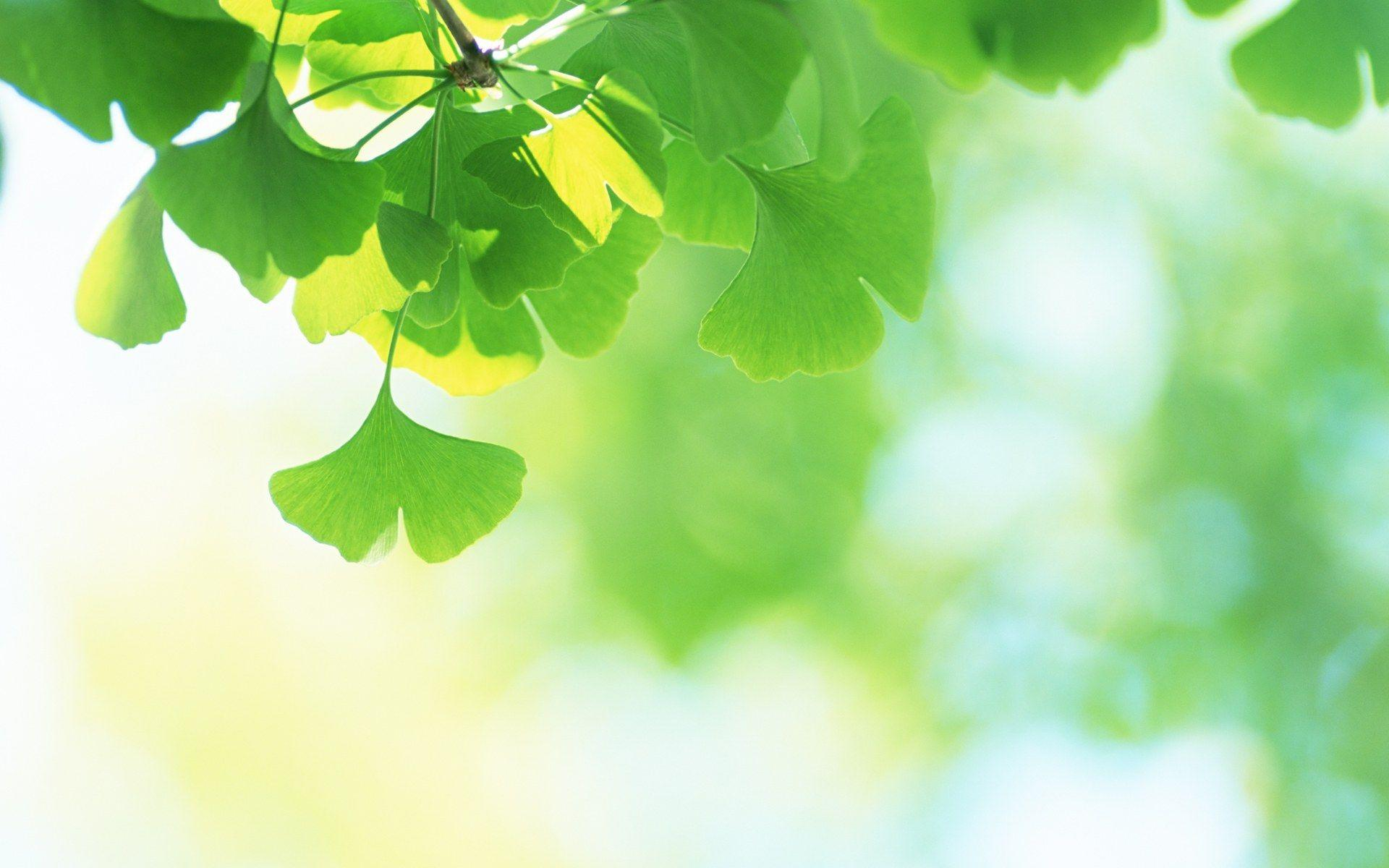 green plant desktop - photo #15
