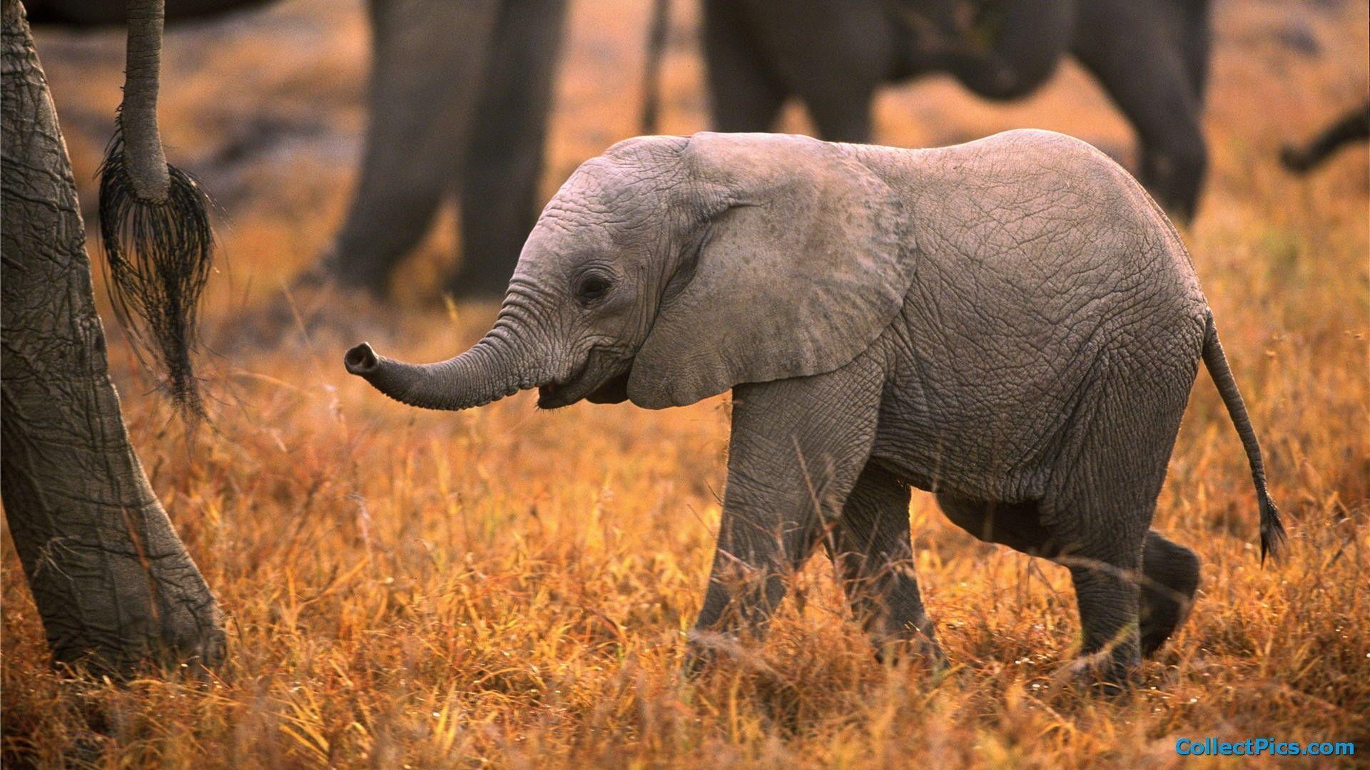 baby elephant wallpapers wallpaper cave
