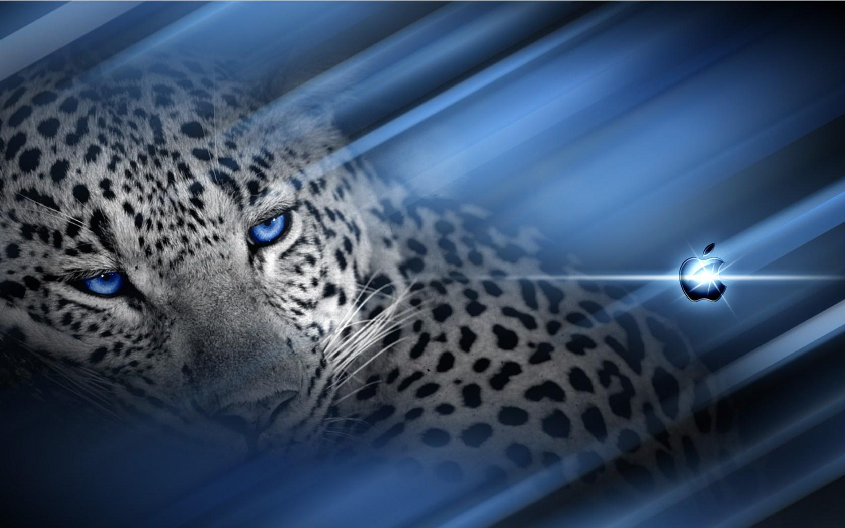 black cheetah backgrounds wallpaper cave