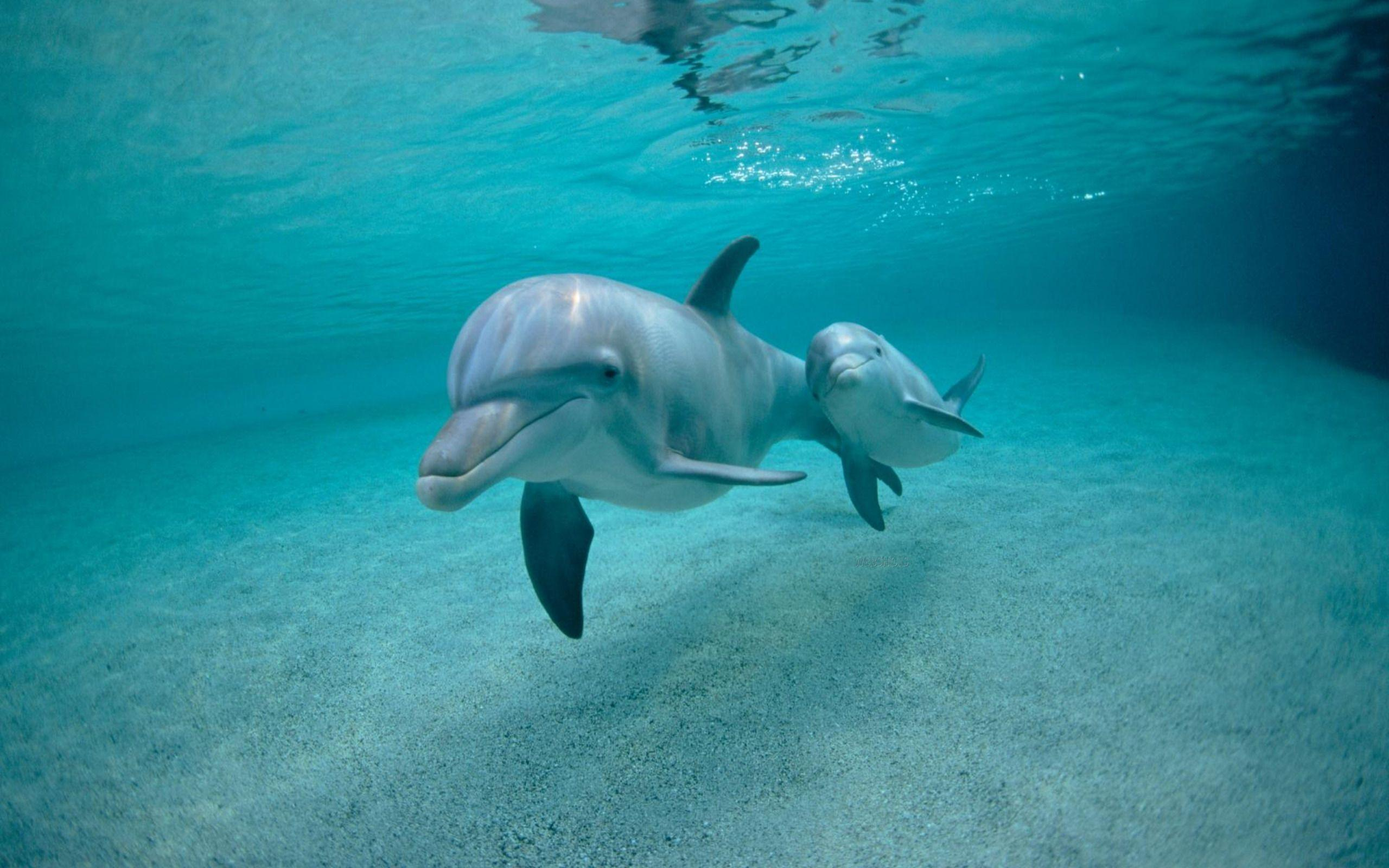 Dolphin Wallpapers - Full HD wallpaper search - page 2