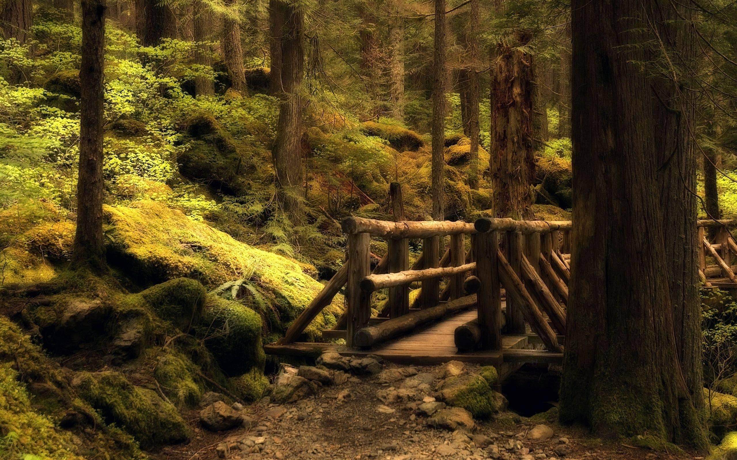 Forest Bridge hd wallpapers
