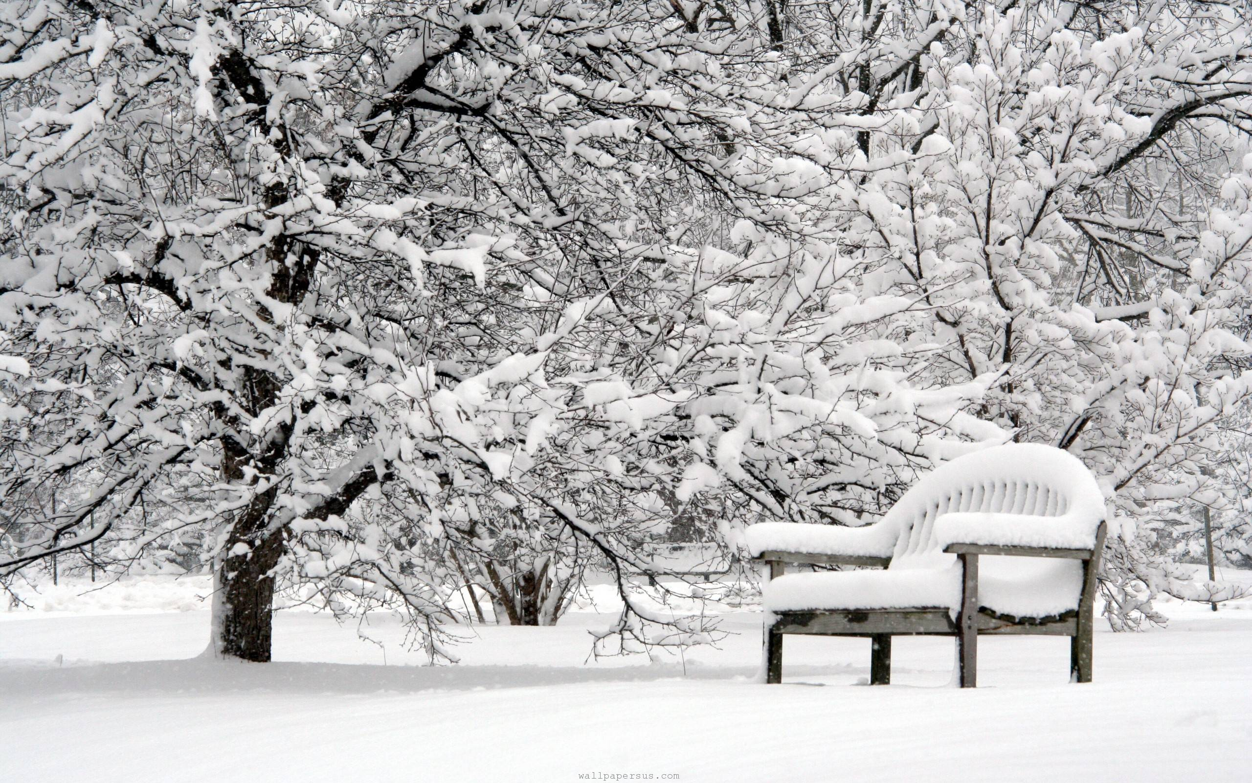 Beautiful Winter Beautiful Bench Lovely Nature Pretty Snow