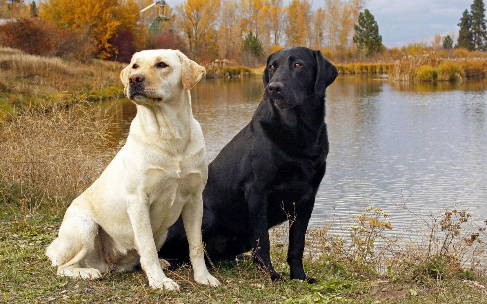 Breeds Of Dogs You Would Love To Pet