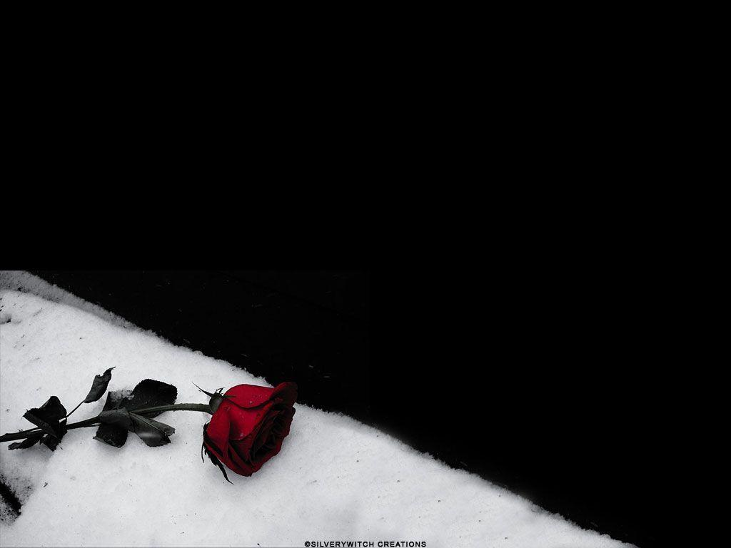 Black Rose wallpapers from Gothic wallpapers