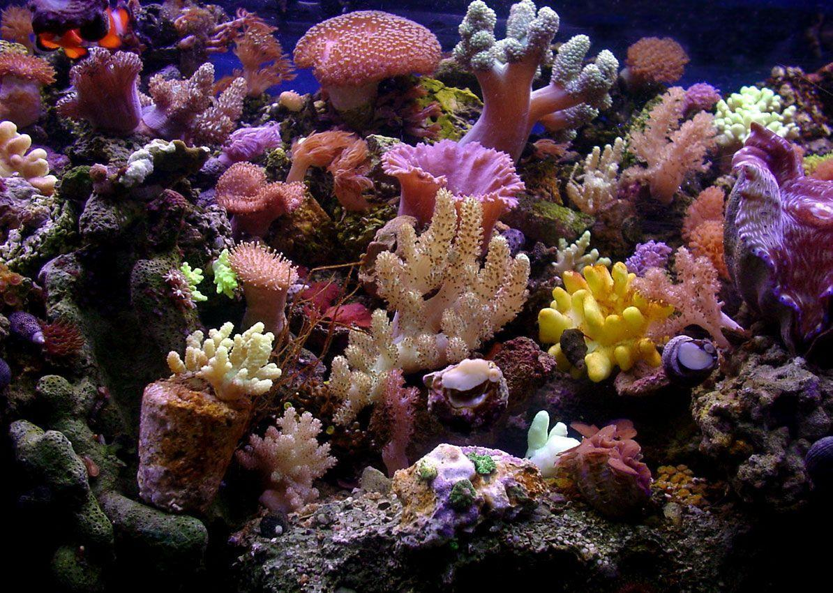 Gallery For > Real Coral Reef Wallpaper