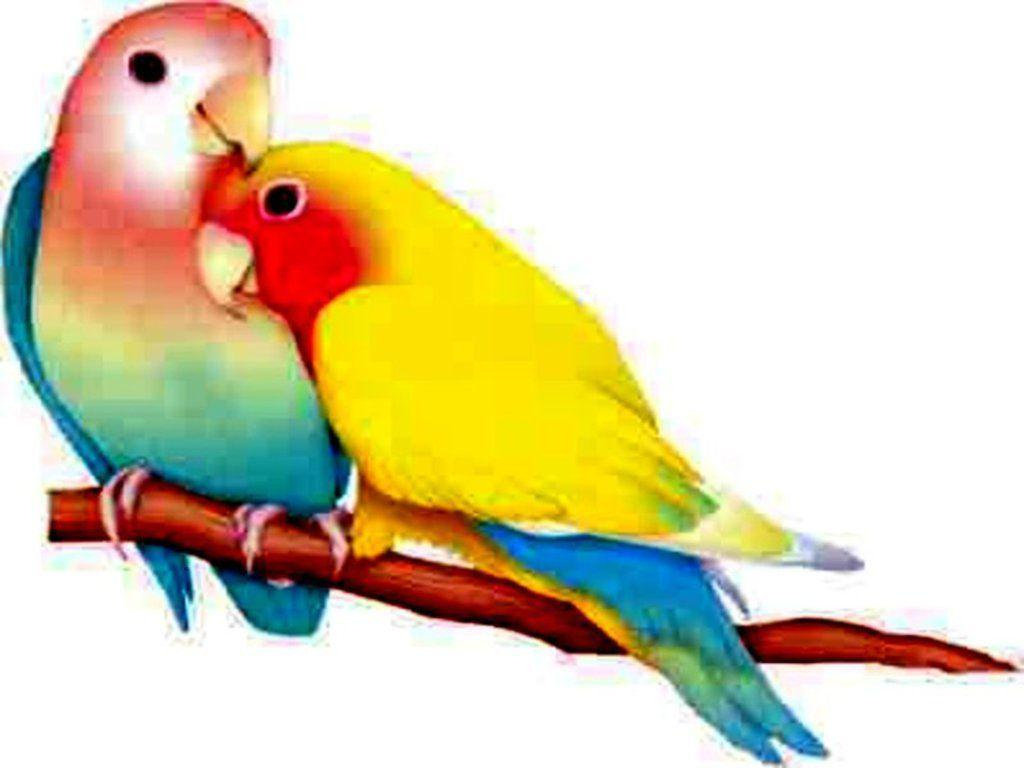Desktop Wallpaper Love Birds : Lovebirds Wallpapers - Wallpaper cave