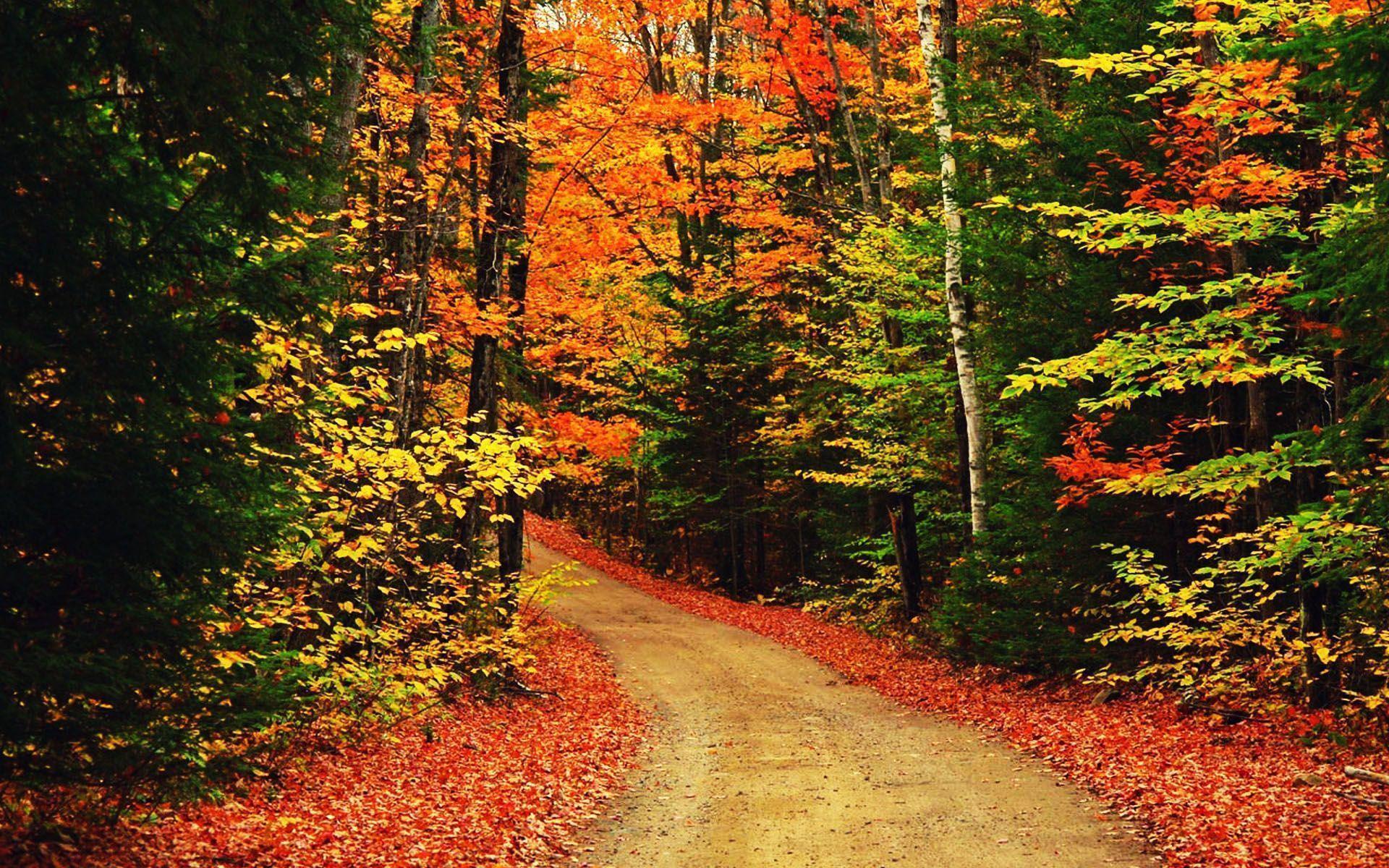 autumn wallpaper 007 free - photo #13