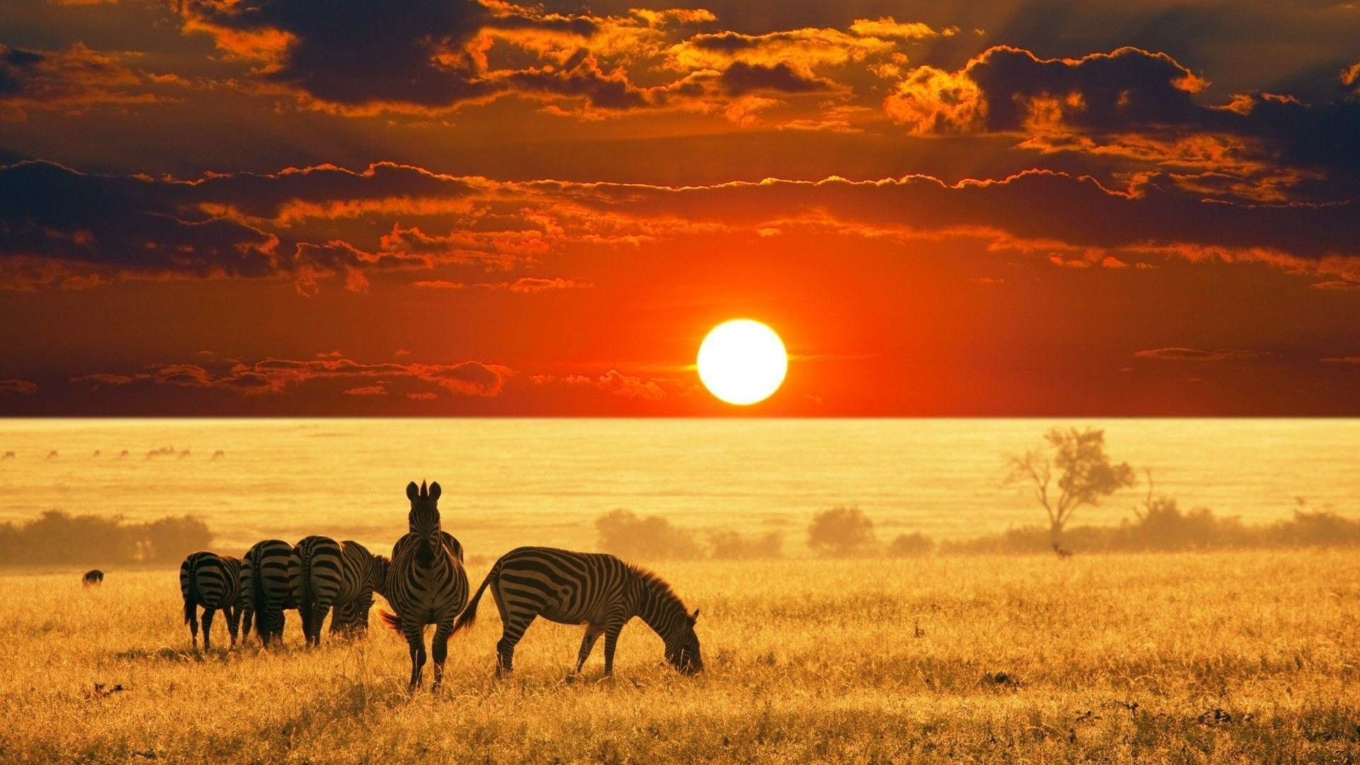 Wild Animals Safari Backgrounds Wallpapers