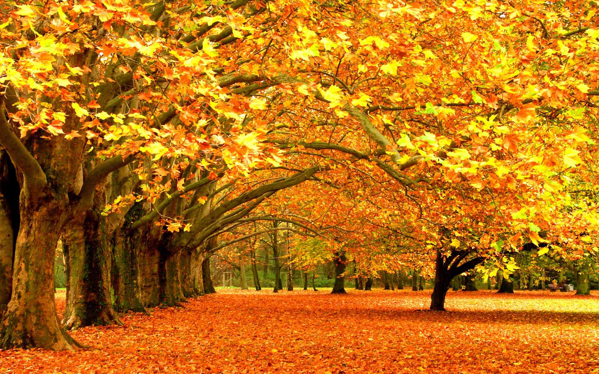 free autumn wallpaper backgrounds wallpaper cave