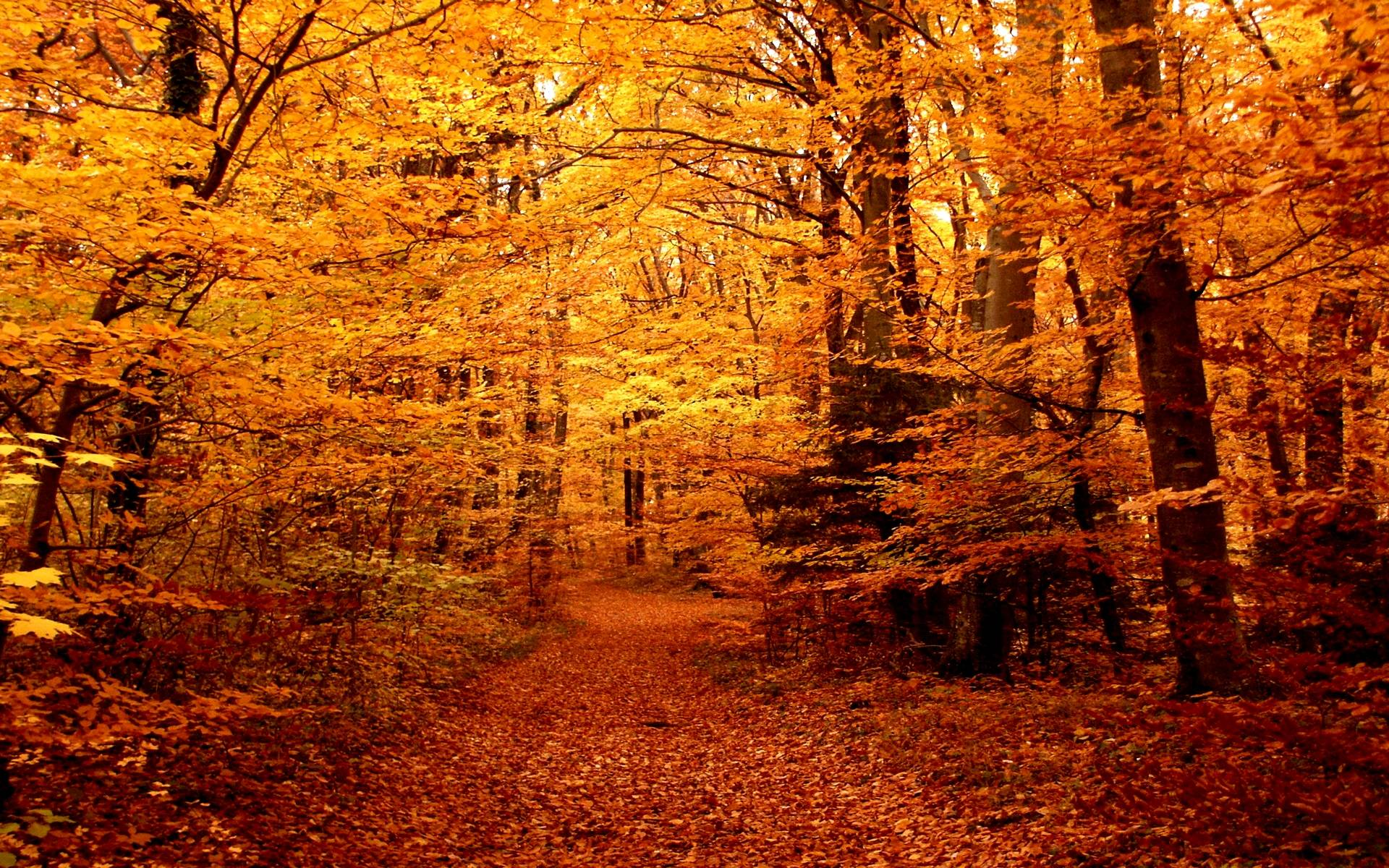 fall woods backgrounds wallpapers - photo #17