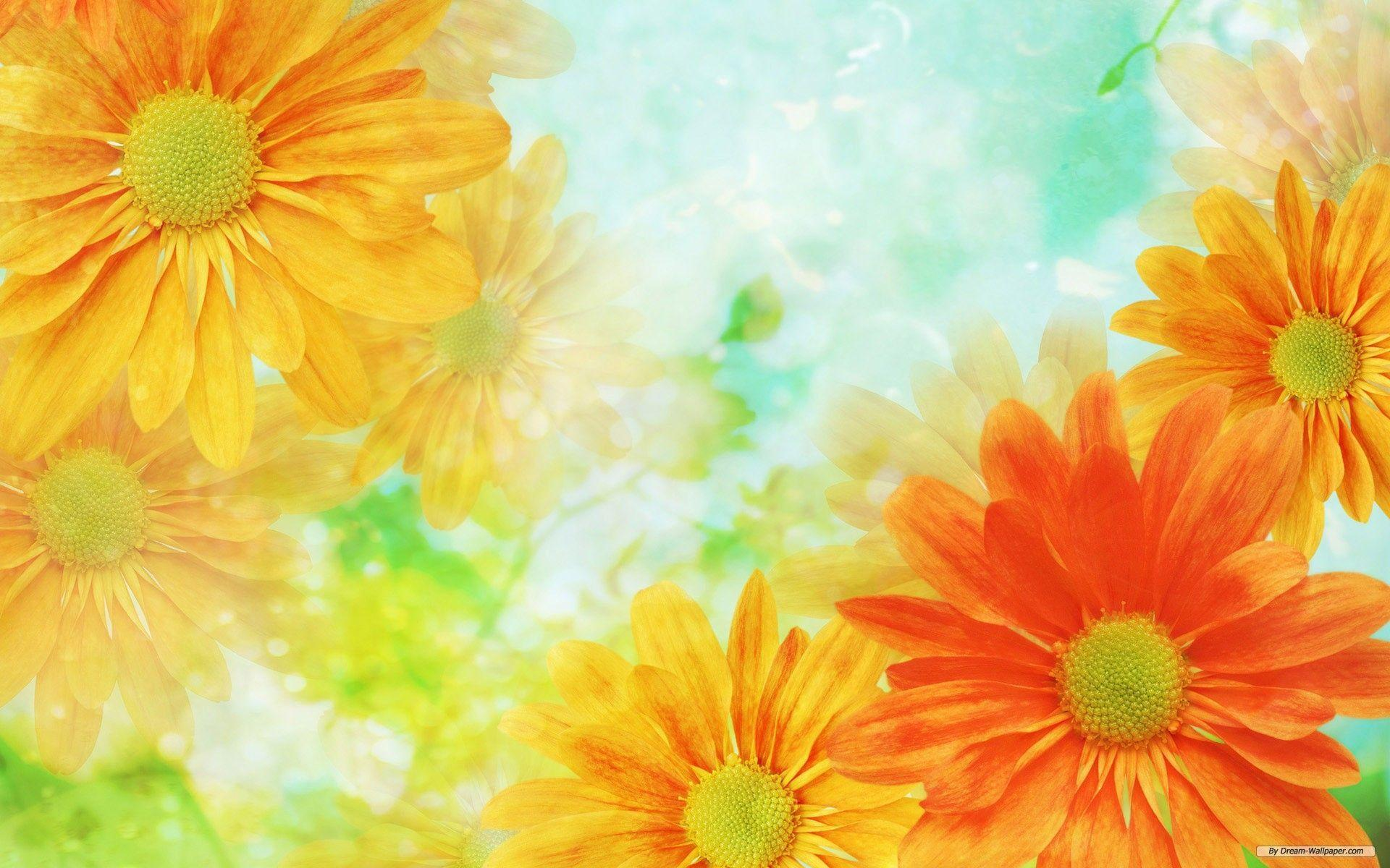 Flowers backgrounds wallpaper cave - Floral background ...