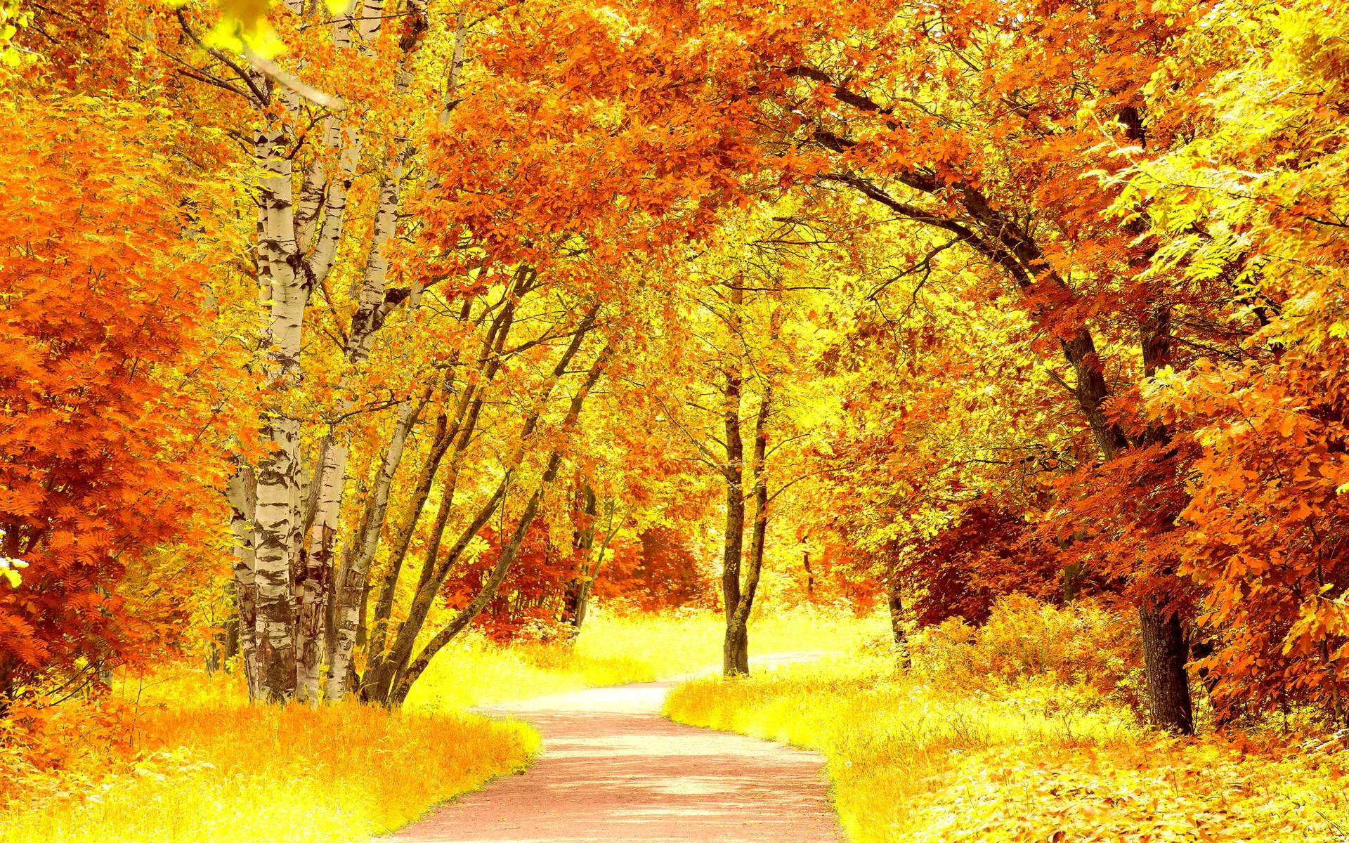 awesome bright autumn scenery - photo #18