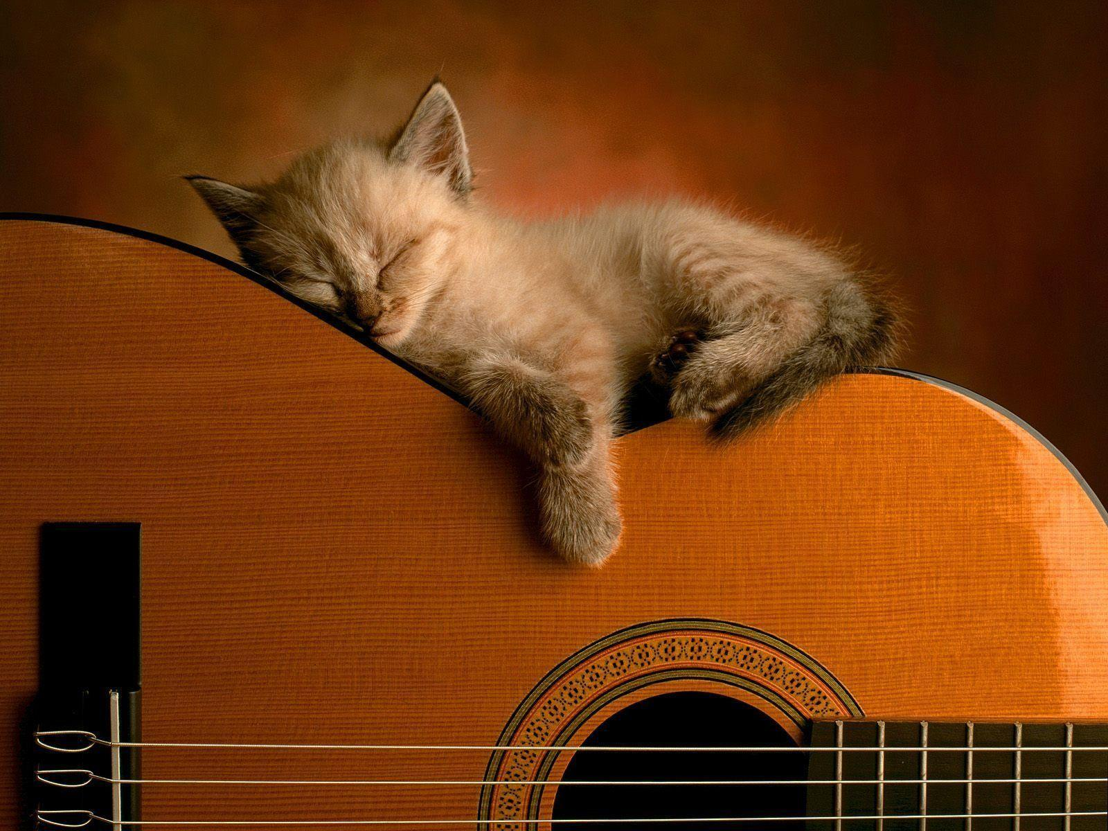 Wallpapers For > Cool Acoustic Guitar Wallpapers