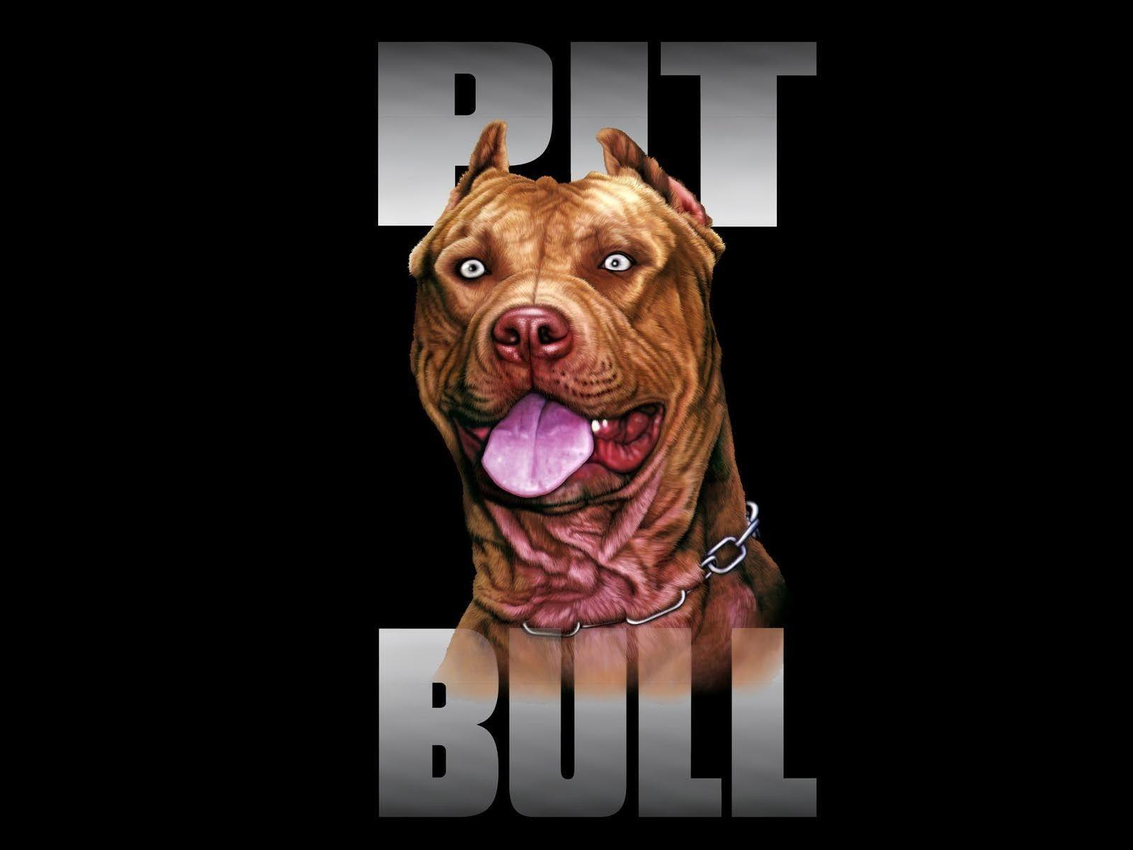 Wallpapers For Pitbull Dog Backgrounds