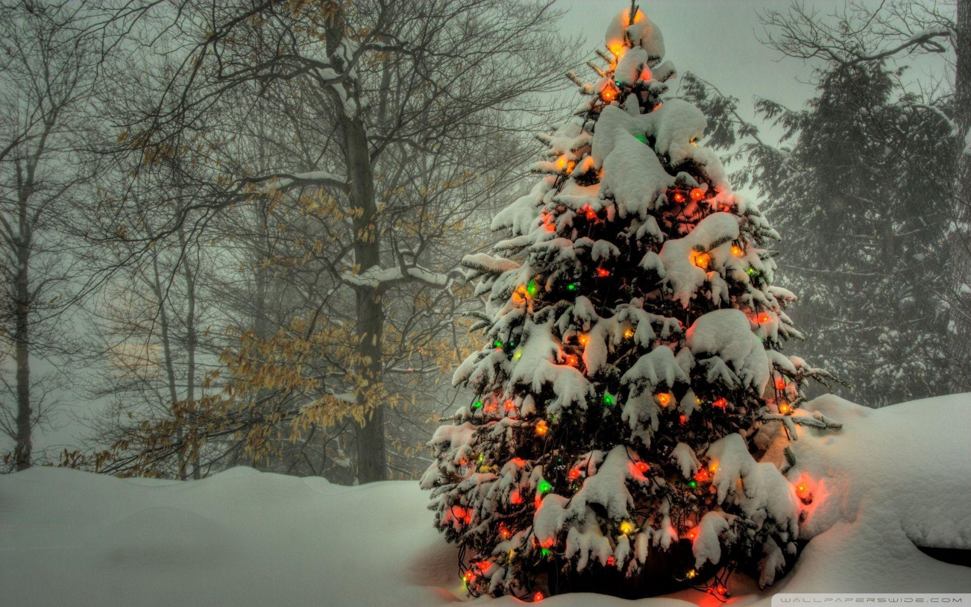 Christmas Tree Images Free Download.Christmas Tree Wallpapers Free Wallpaper Cave