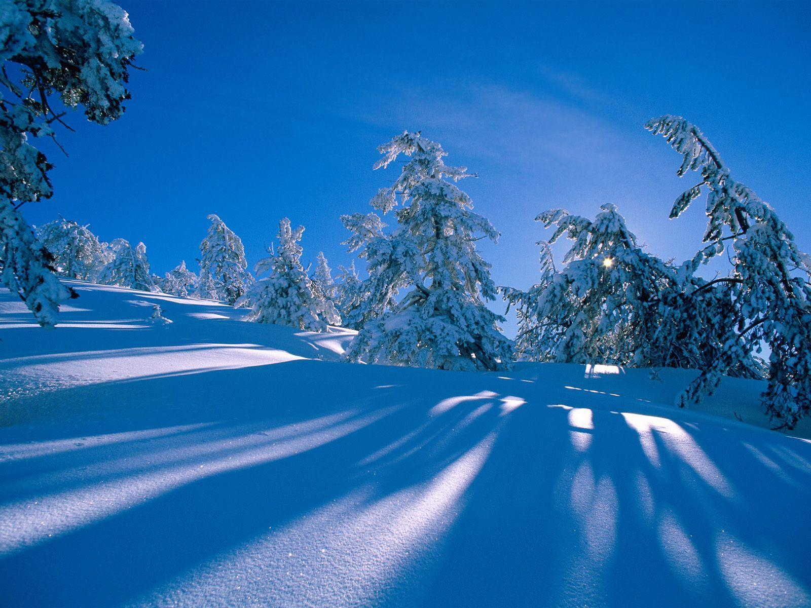 Snowy shadows snow wallpapers free desktop backgrounds