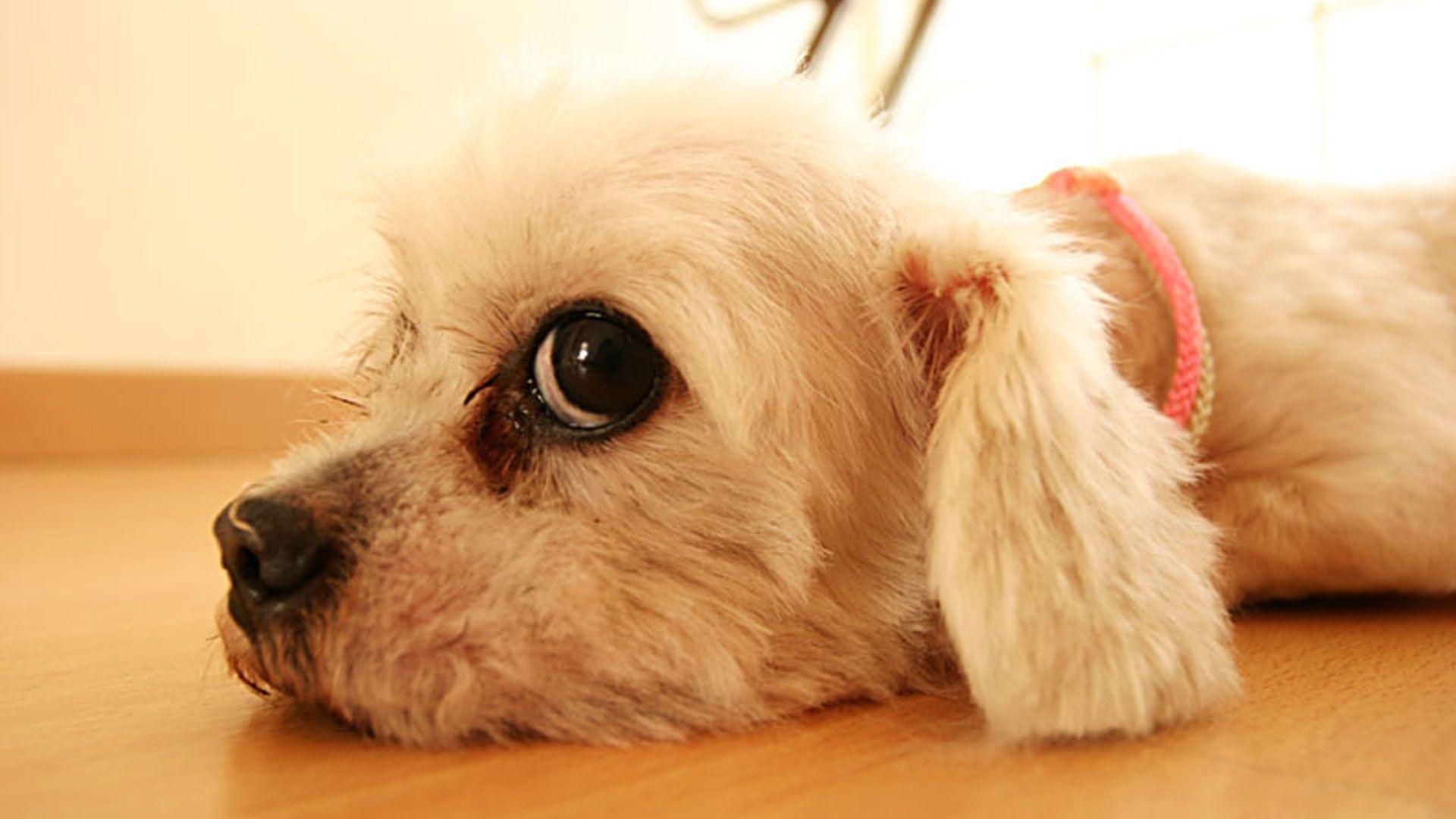 Black Dog HD Wallpapers - Free download latest Black Dog HD ...