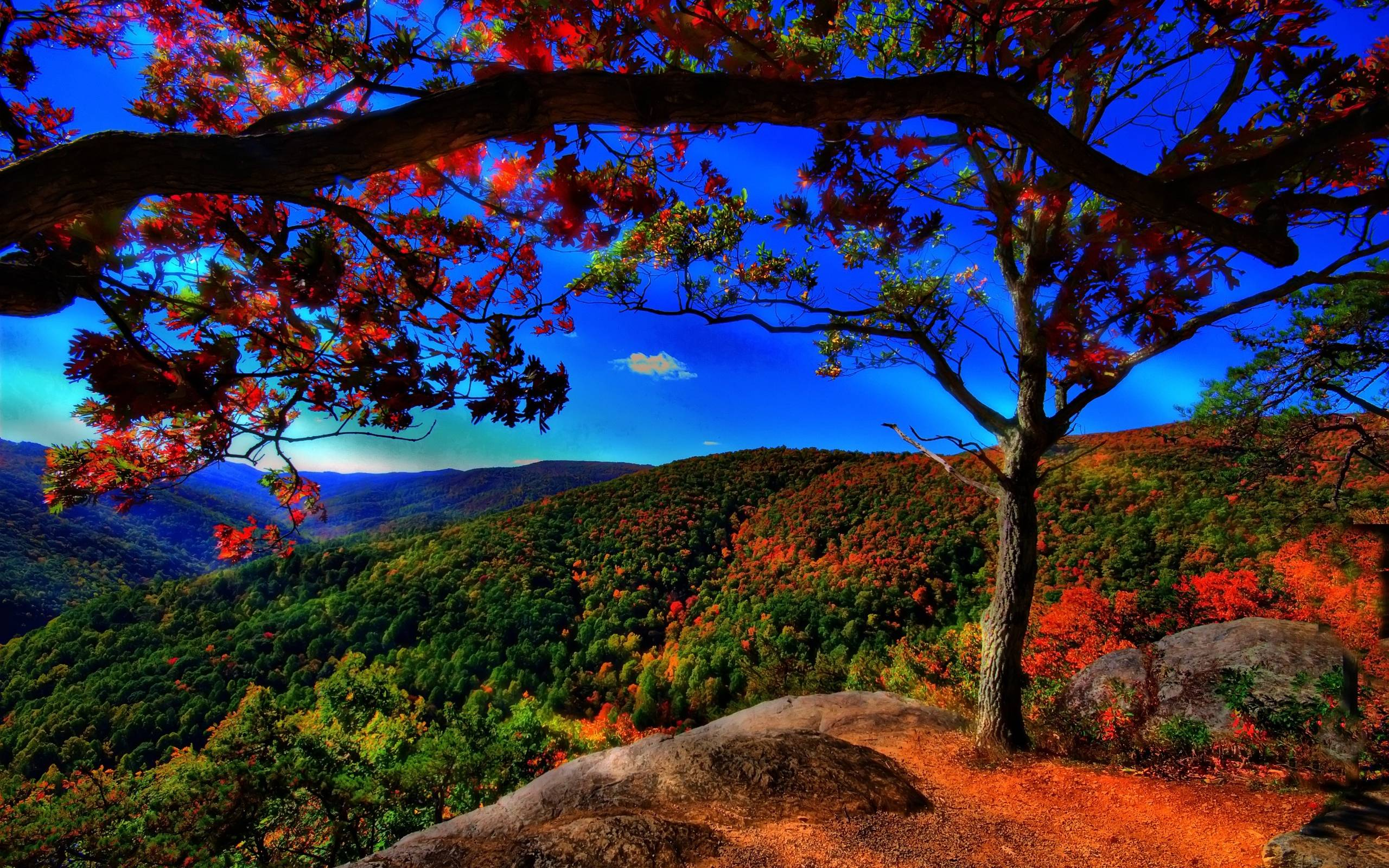 desktop fall wallpaper free com 1600x2560px fall wallpaper fall