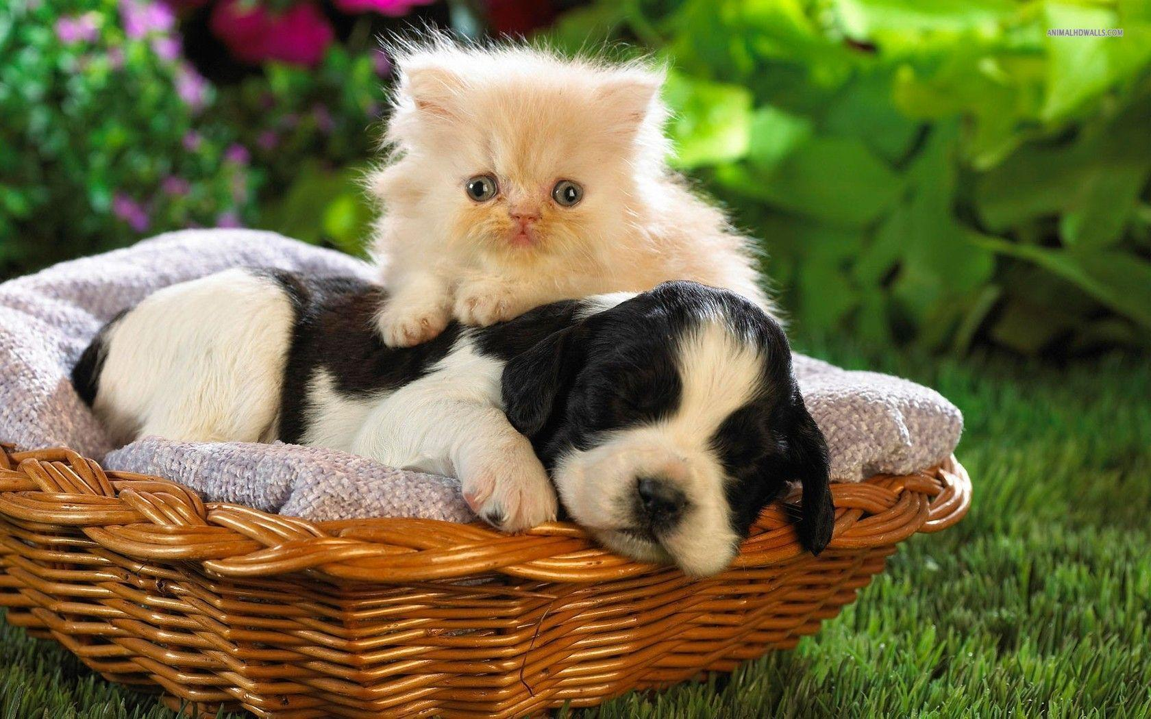 Kitty World: Kitten And Puppy Wallpapers