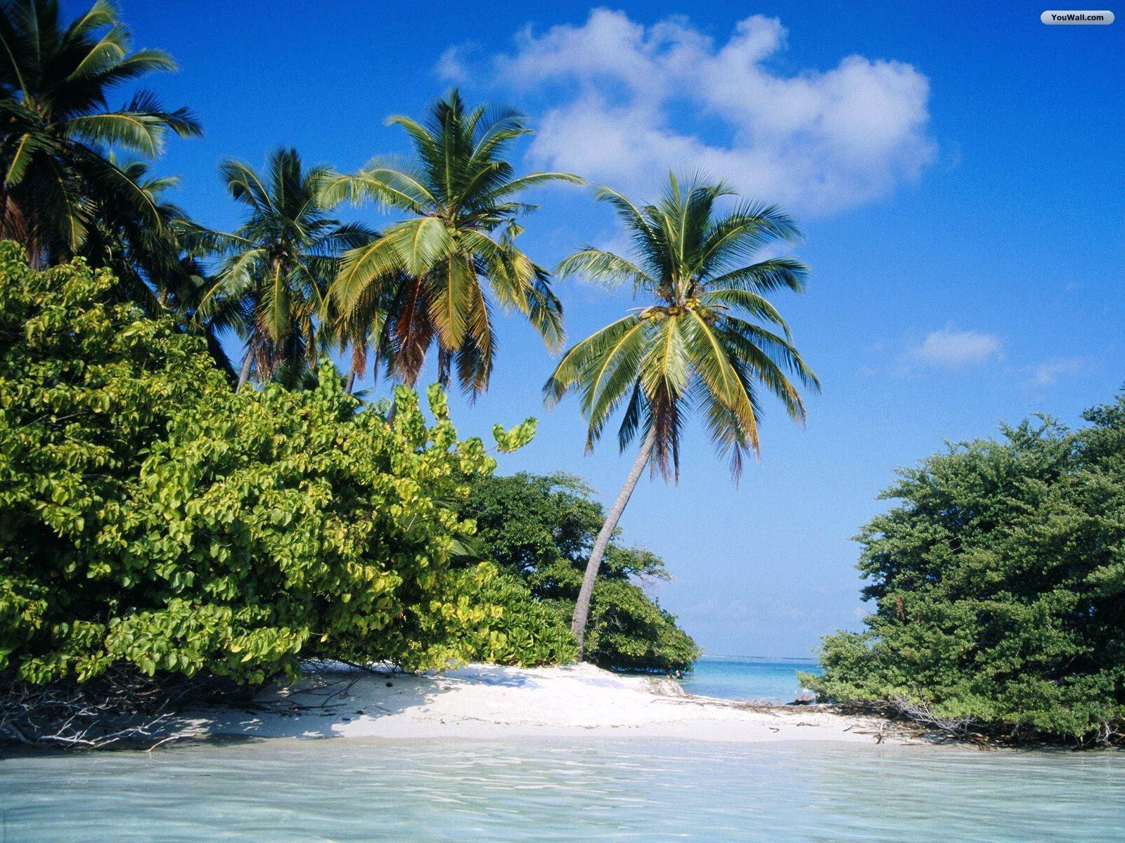 tropical island backgrounds - photo #31