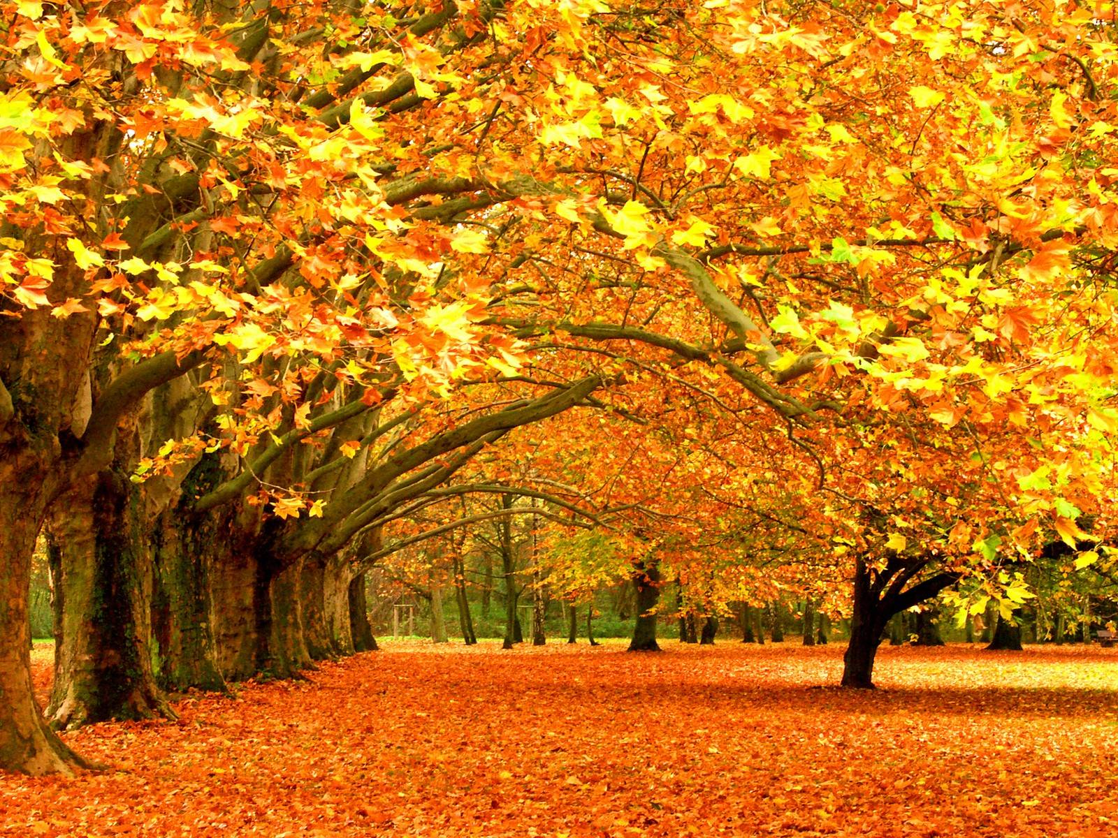 Autumn Wallpapers For Desktop Wallpaper Cave