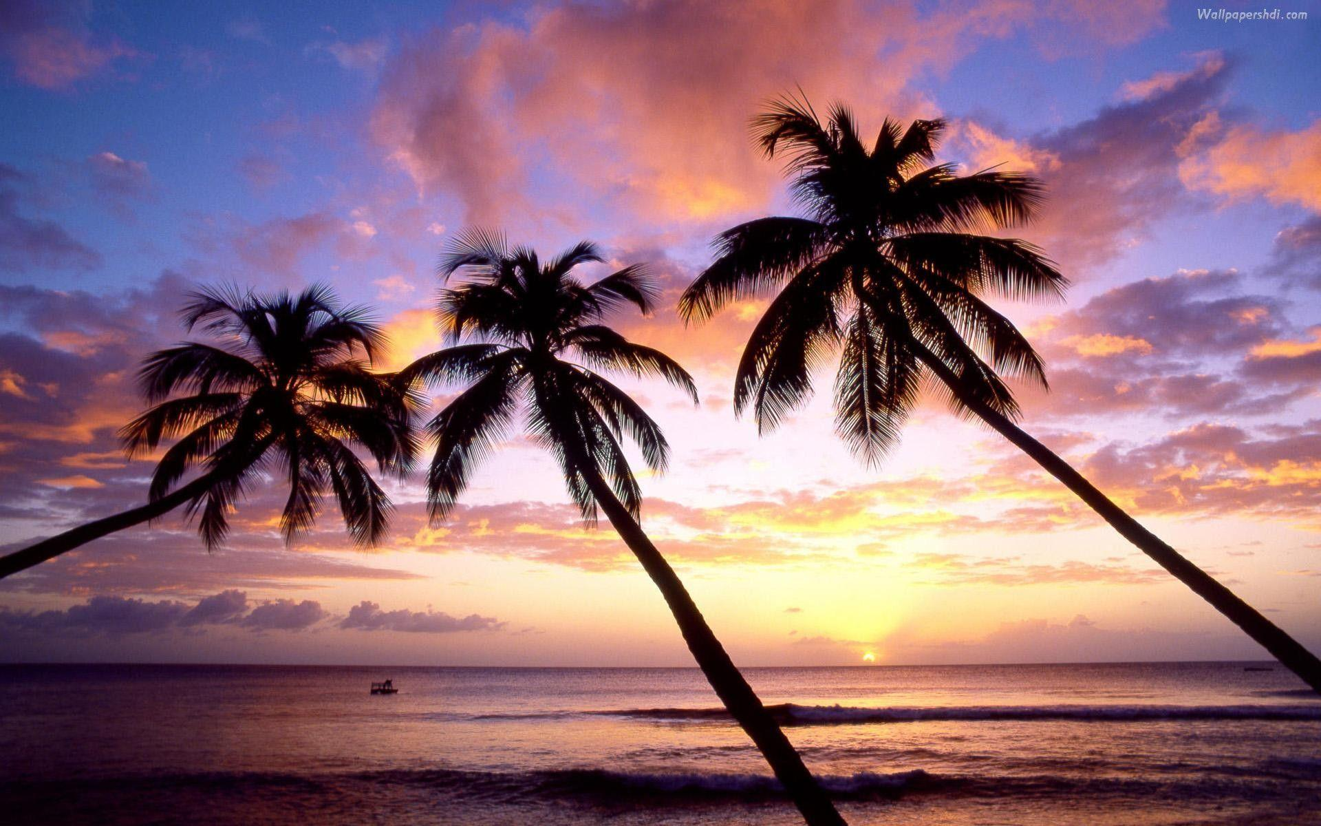 Palm Trees On The Beach 17337 Hd Wallpapers In N Tropical