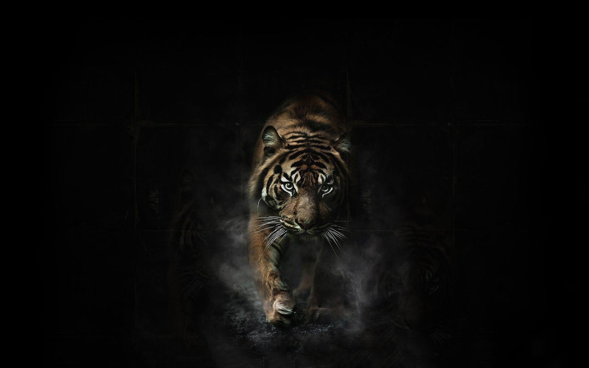 Angry Tiger Wallpapers - Full HD wallpaper search