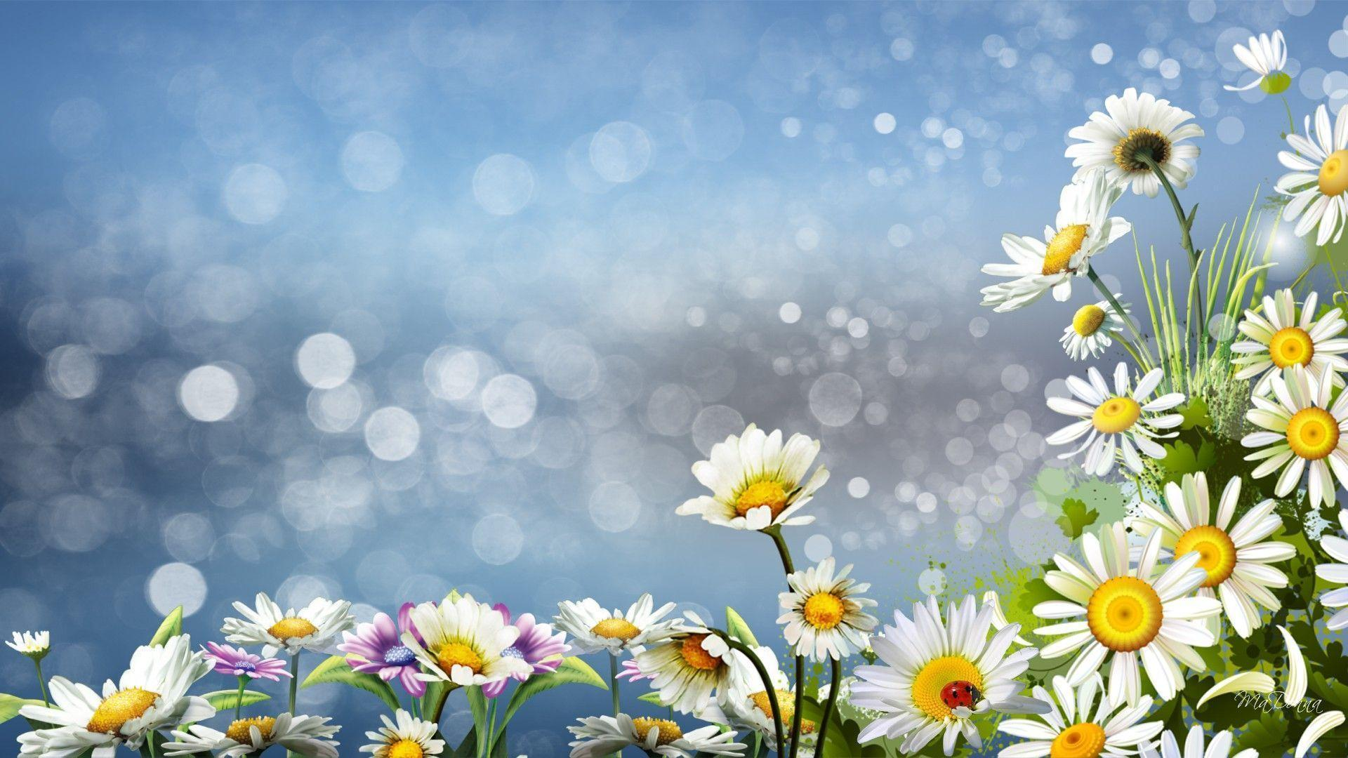 Daisies Surprise Daisy Wild Flowers Nature hd wallpapers #