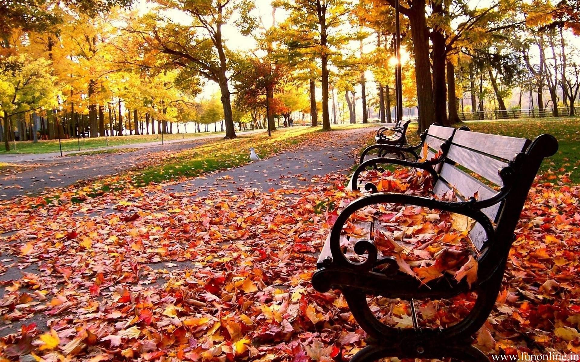 Fall Season Wallpapers - Full HD wallpaper search