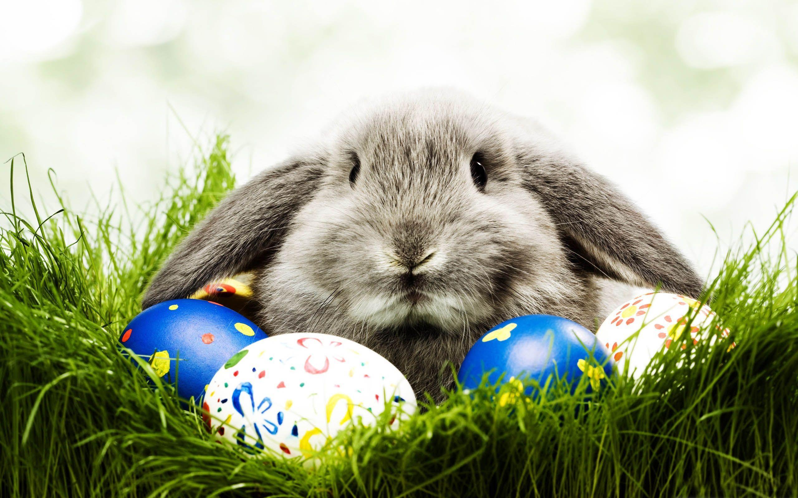Easter bunny wallpapers free wallpaper cave - Easter desktop wallpaper ...