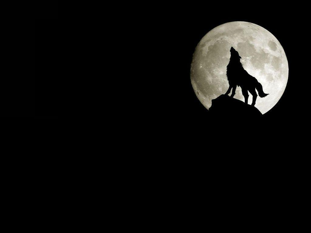 Wallpapers For > Black And White Wolf Howling At The Moon Wallpapers