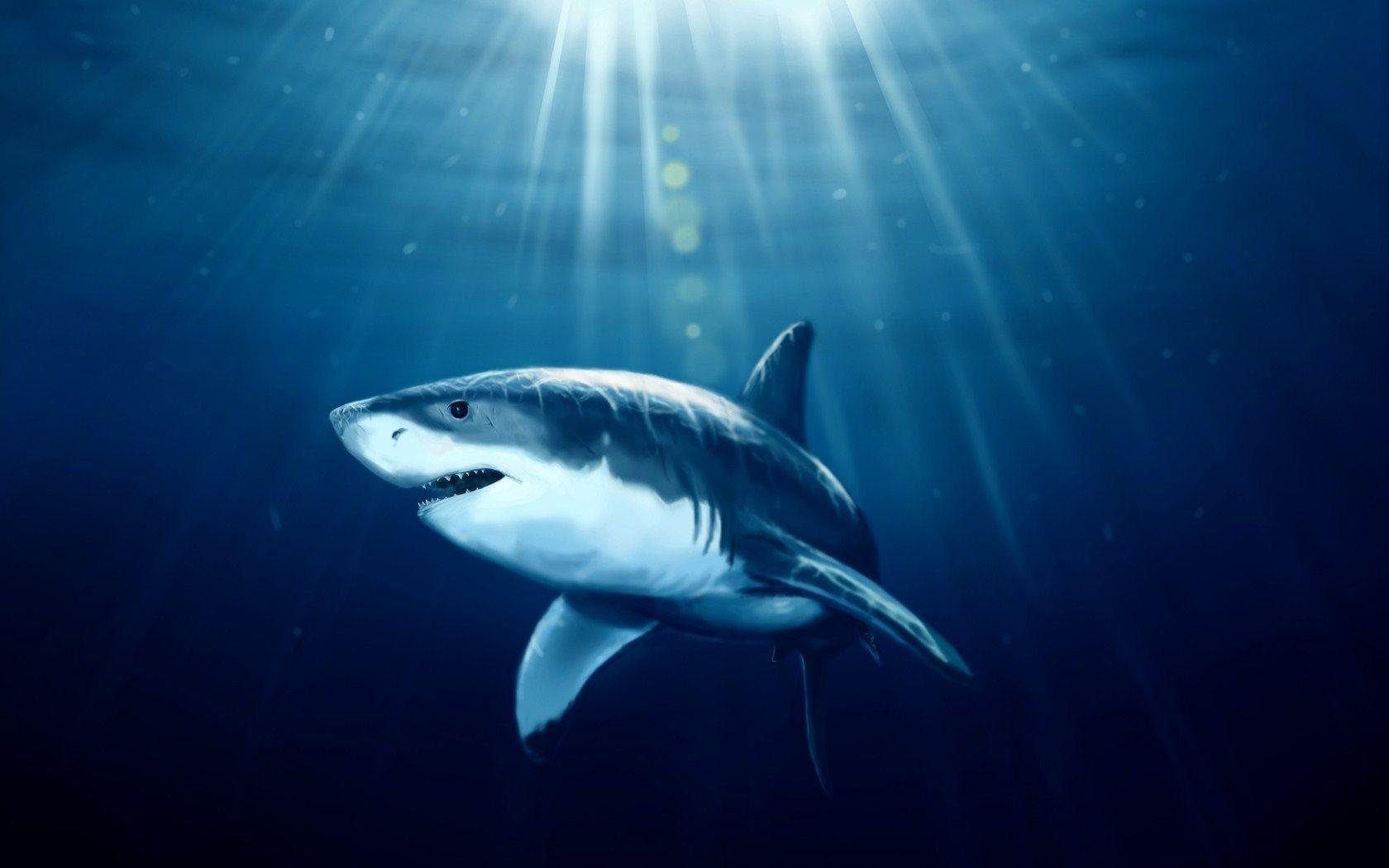 Shark Fish Underwater Art HD Wallpaper - ZoomWalls
