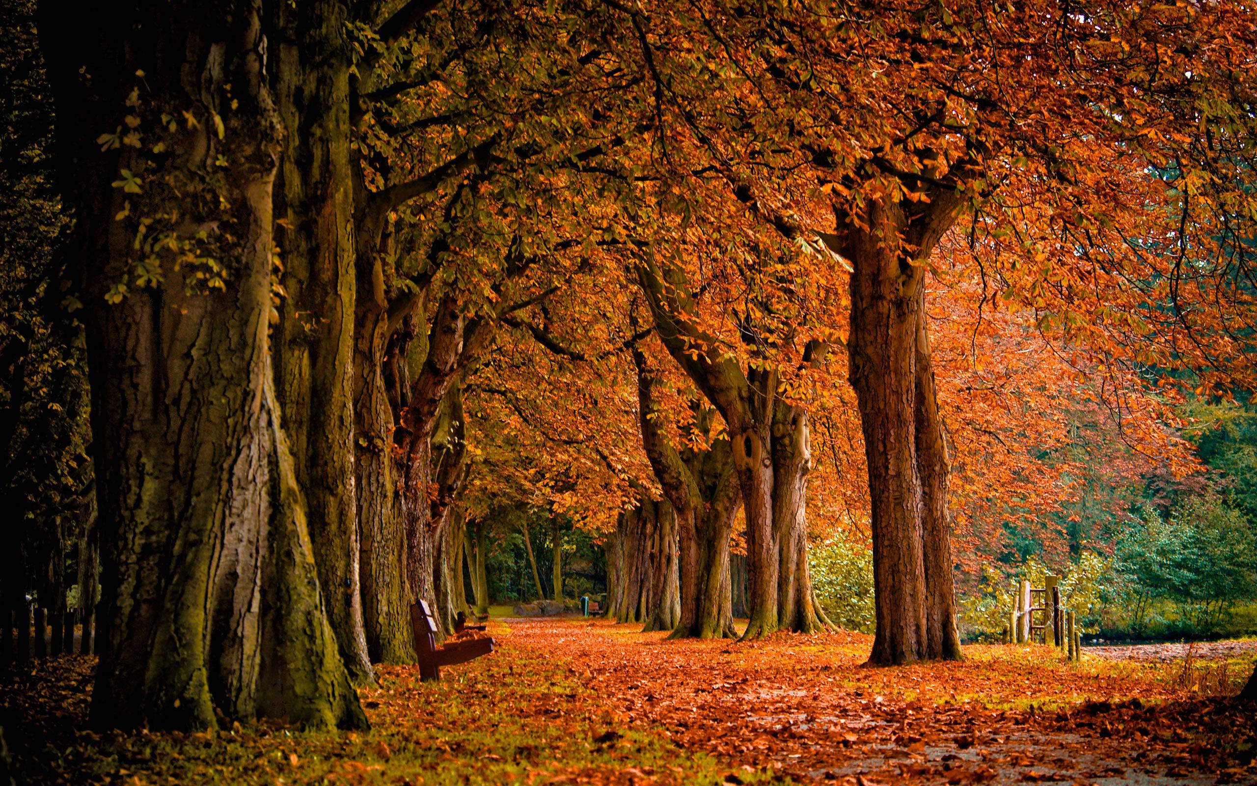 Fall Backgrounds For Computer Wallpaper Cave